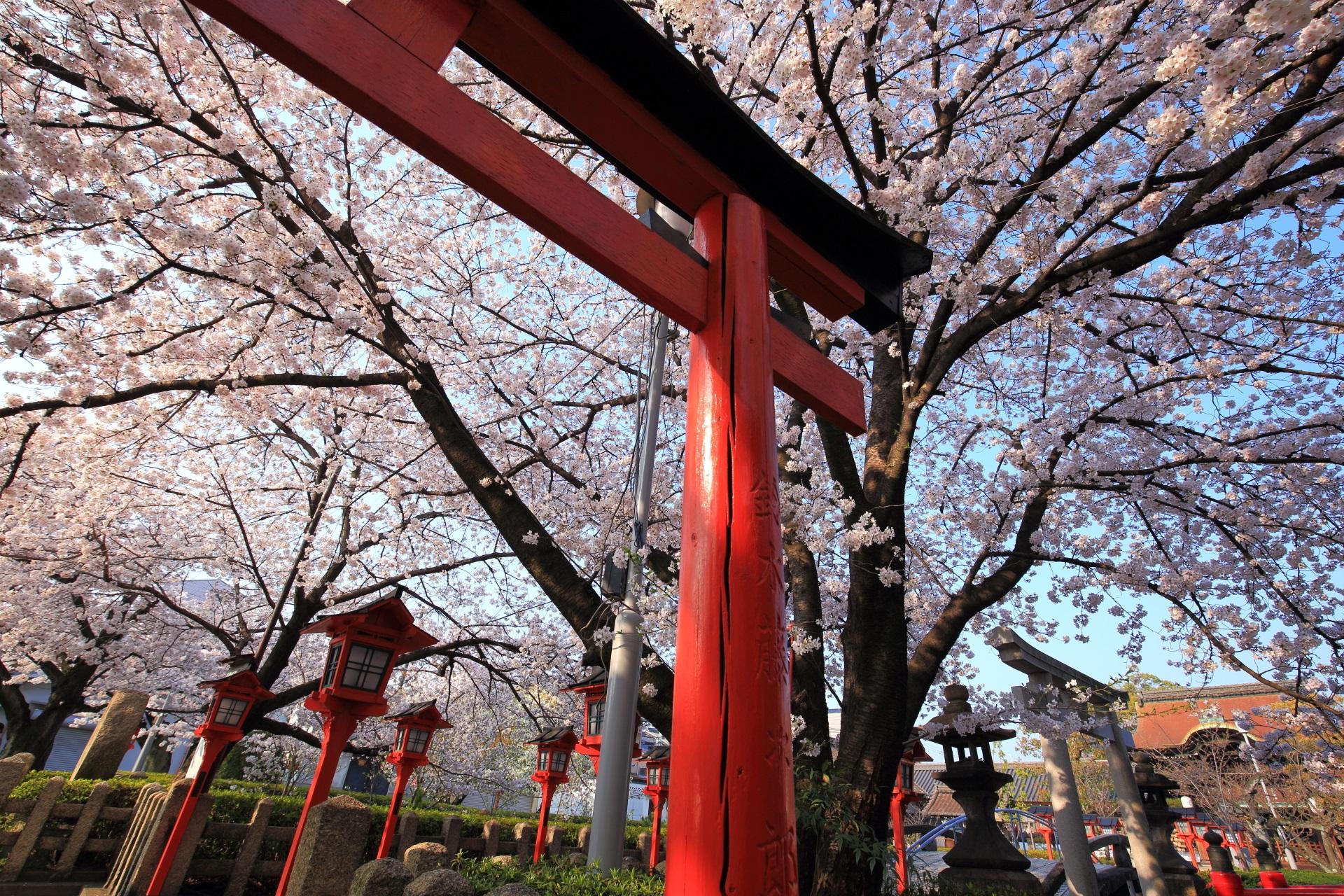 六孫王神社の鳥居の赤と桜のピンクの綺麗なコントラスト