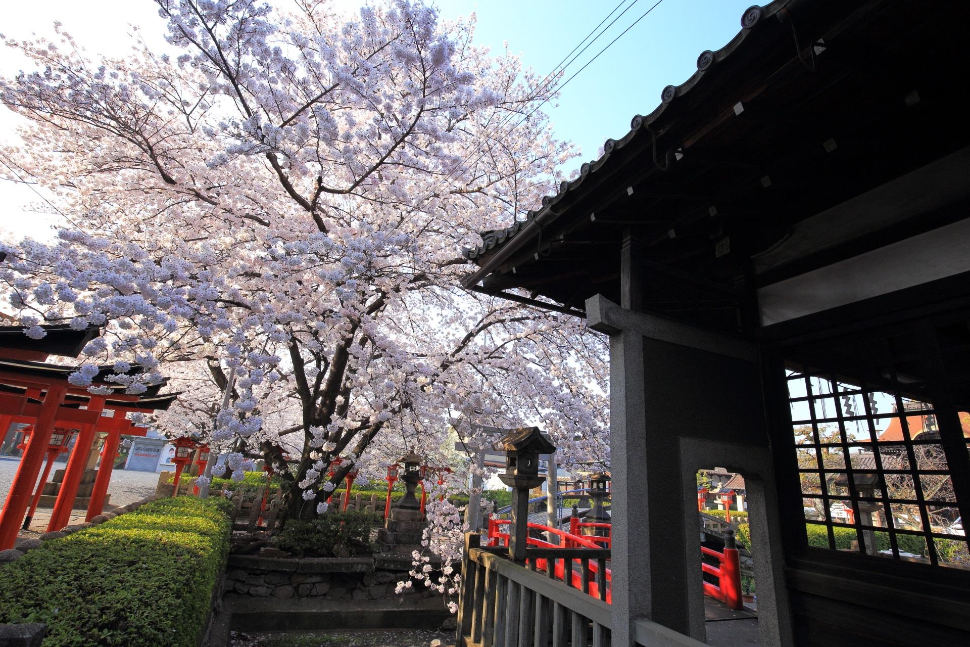 六孫王神社の弁天堂付近から眺めた桜