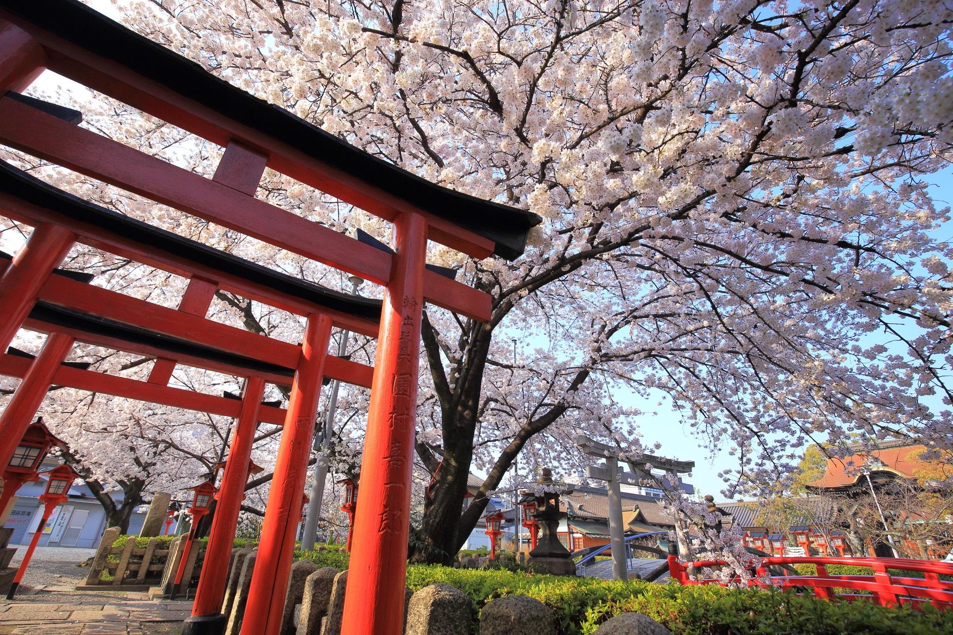 六孫王神社の睦弥稲荷神社の赤い鳥居の上の桜の天井