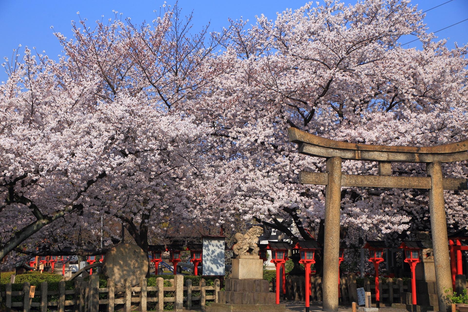 六孫王神社の満開の桜