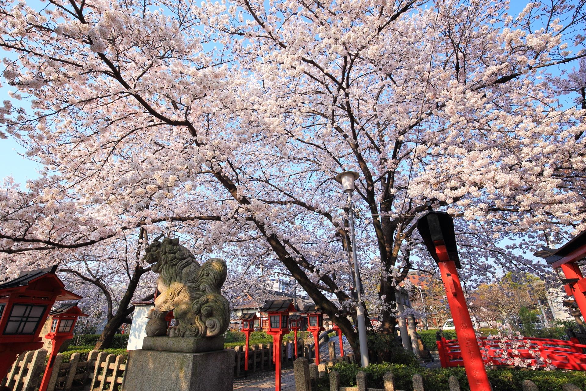六孫王神社の快晴の空を彩る桜