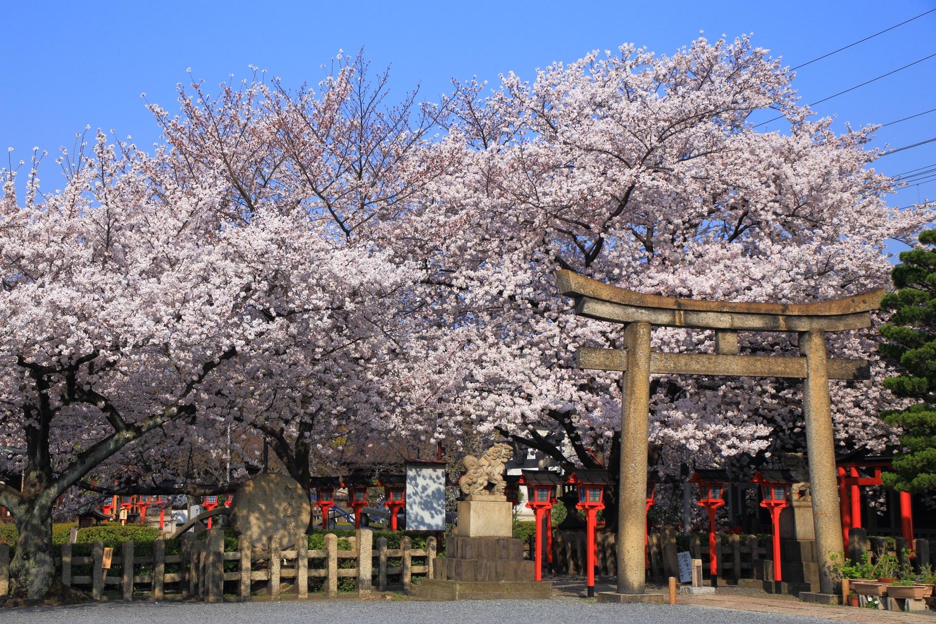 六孫王神社の物凄い密度の桜