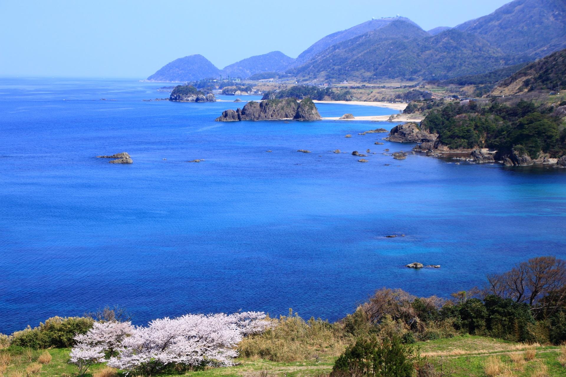 丹後松島の広がるコバルトブルーの海と桜