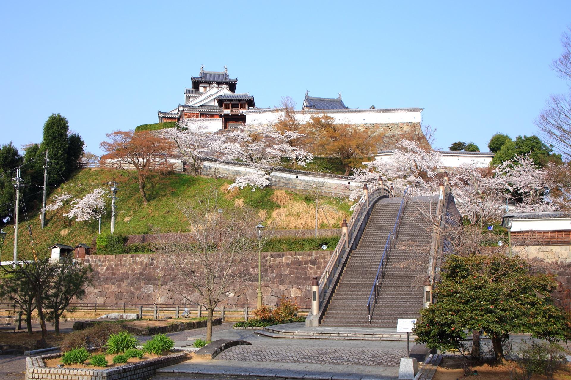 福知山城と昇龍橋の絶品の桜
