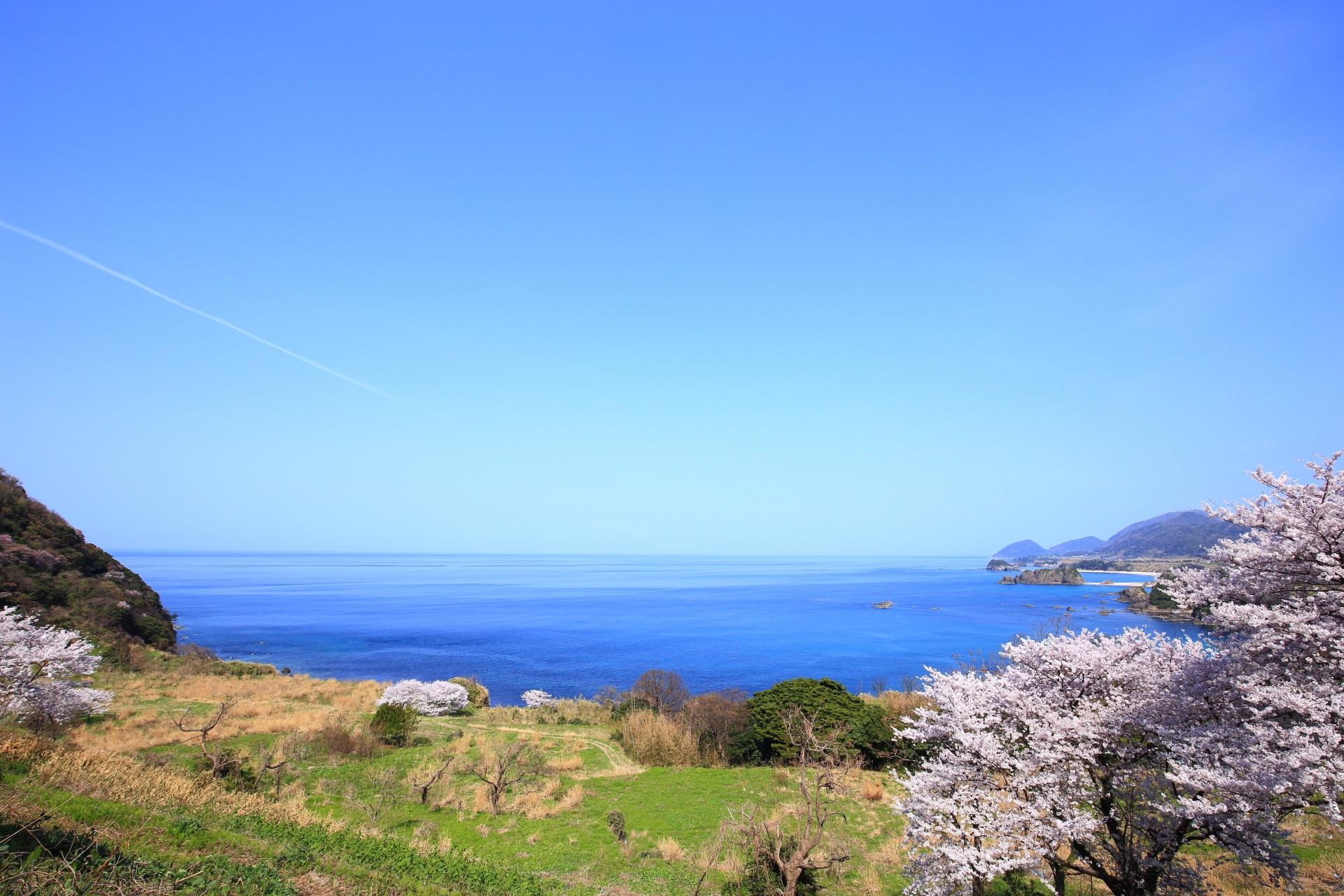 犬ヶ岬と丹後松島の桜