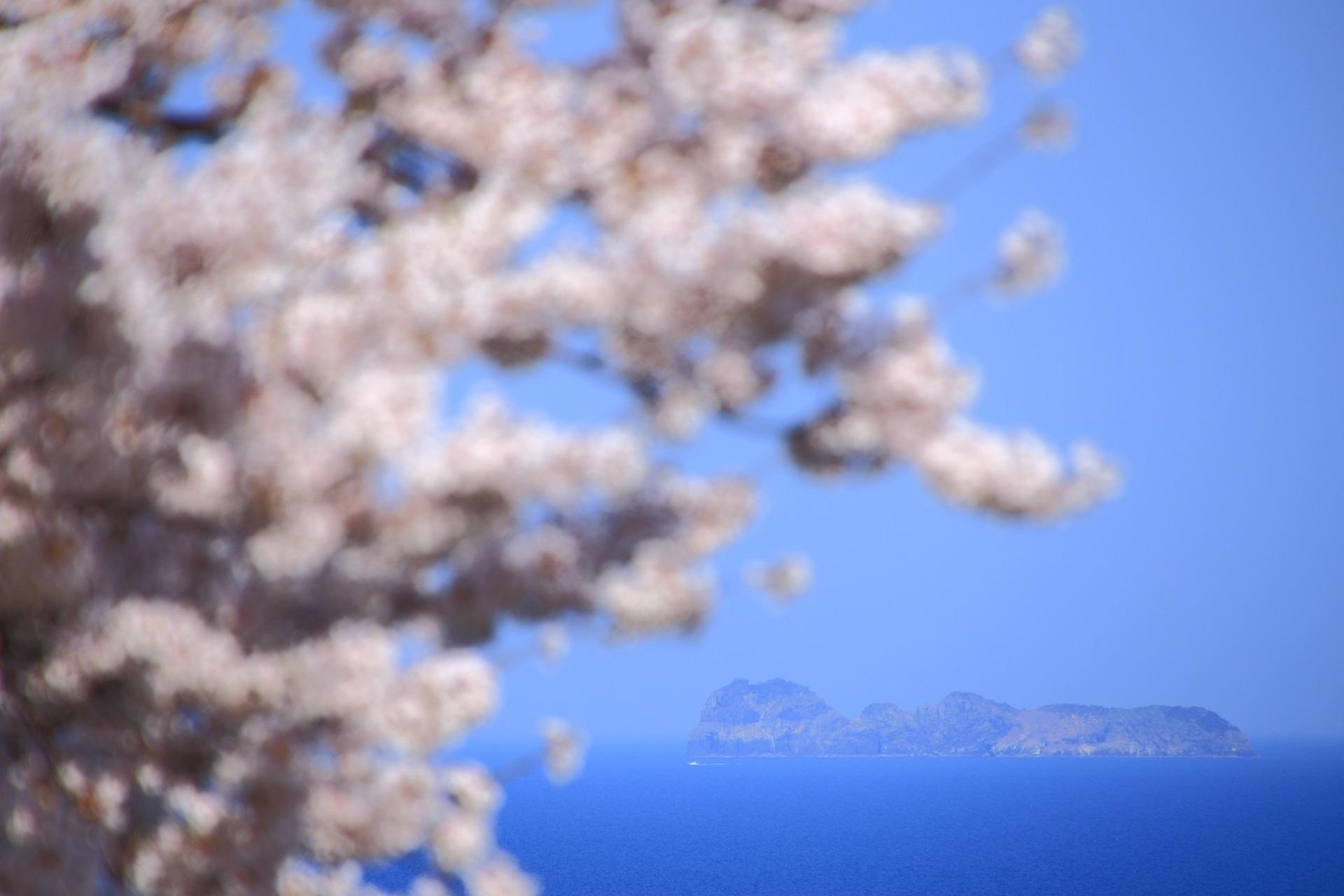 沓島(くつじま)と桜