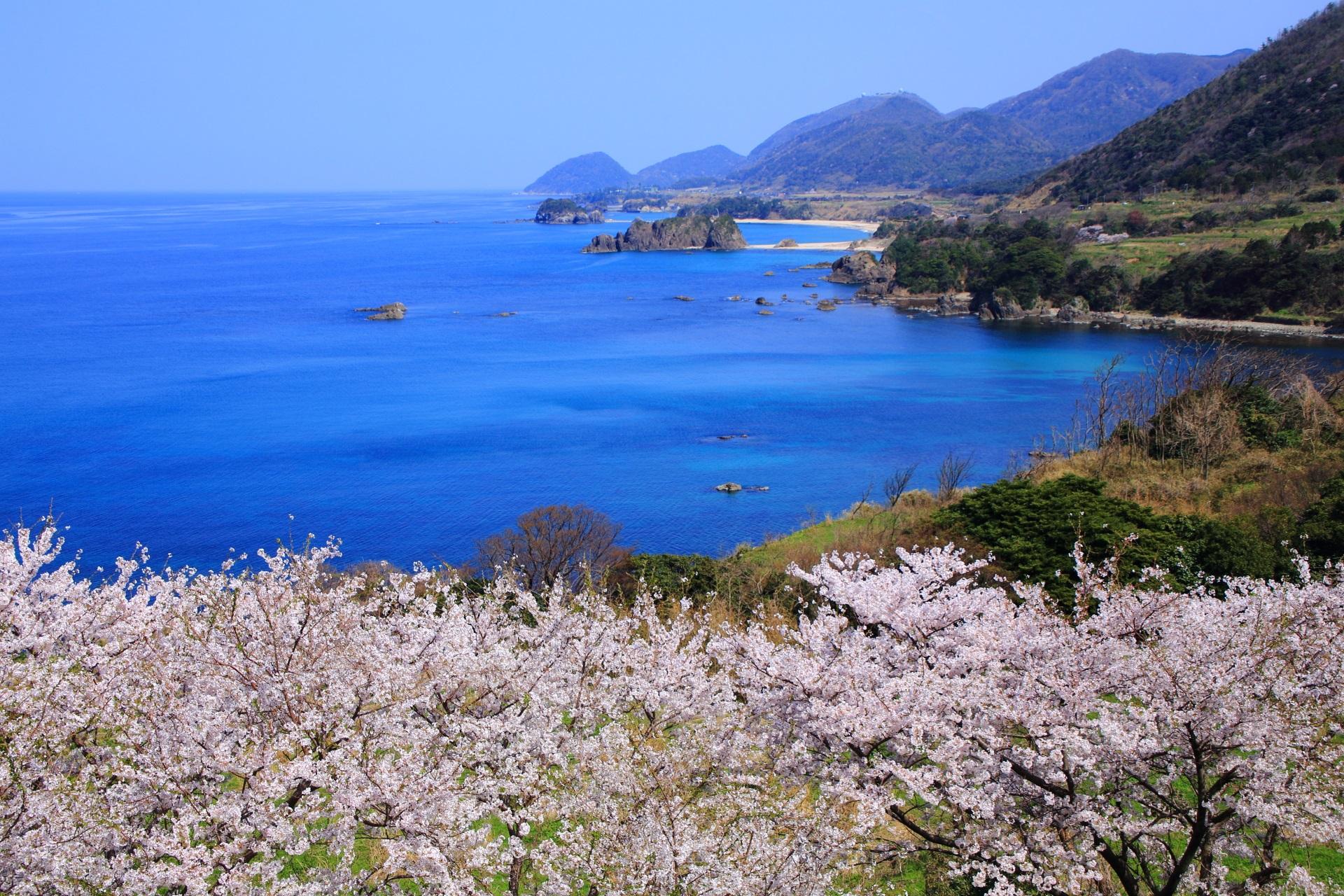 咲き誇る桜の向こうに広がる日本海と丹後松島