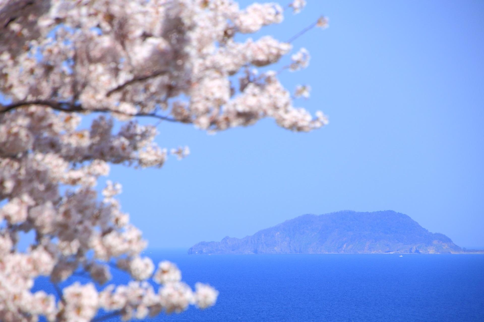冠島(かんむりじま)と桜