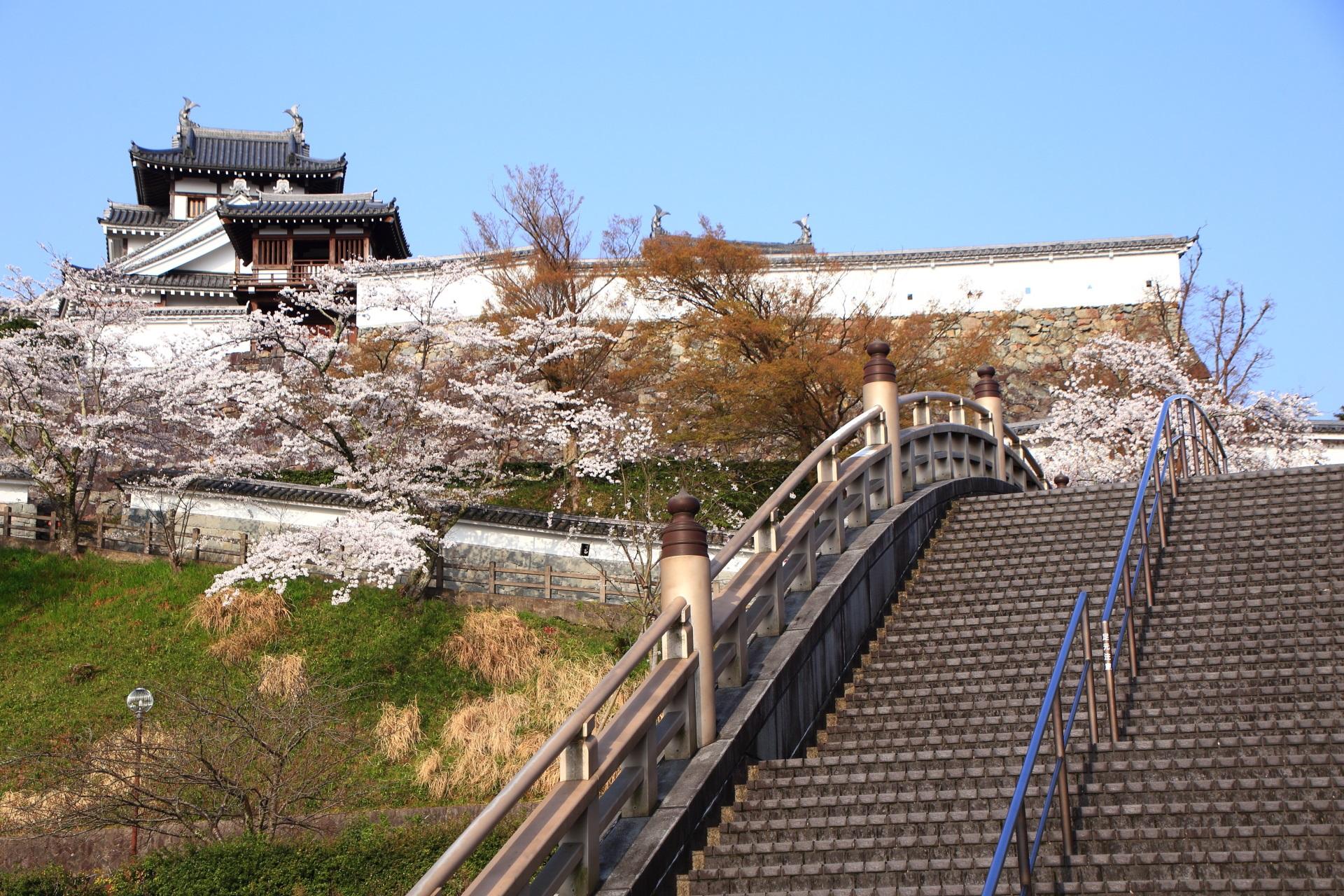 高画質 桜 昇龍橋 写真 福知山城
