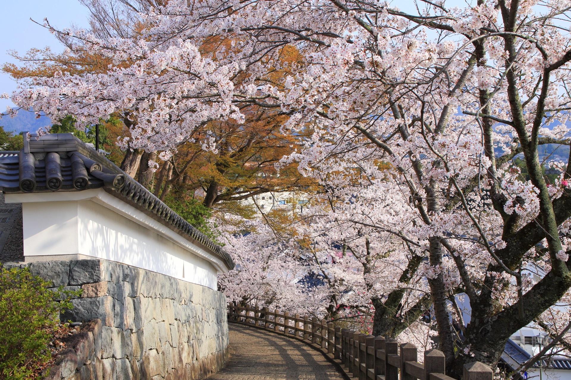 福知山城の溢れる桜