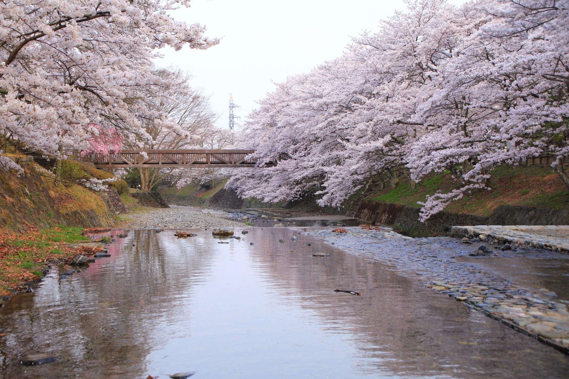 亀岡屈指の桜の名所の七谷川