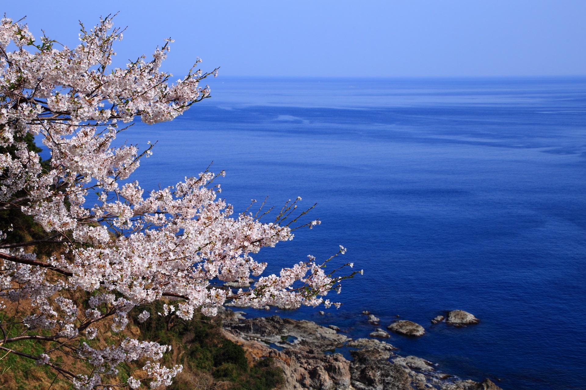 カマヤ海岸の絶品の海の桜