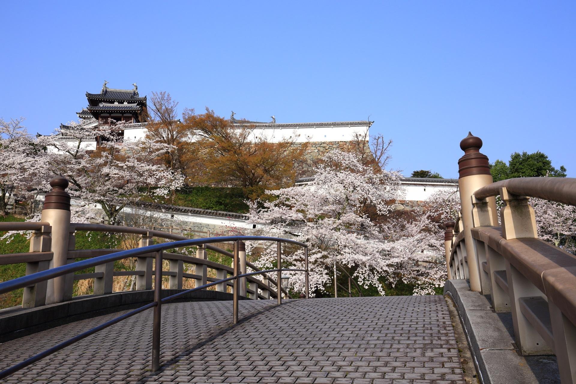 桜の名所の福知山城