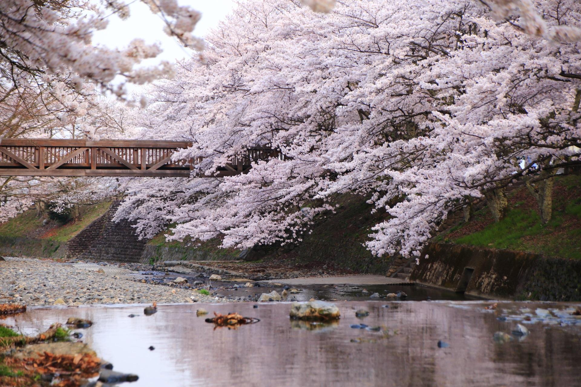 仄かな桜色に染まる七谷川