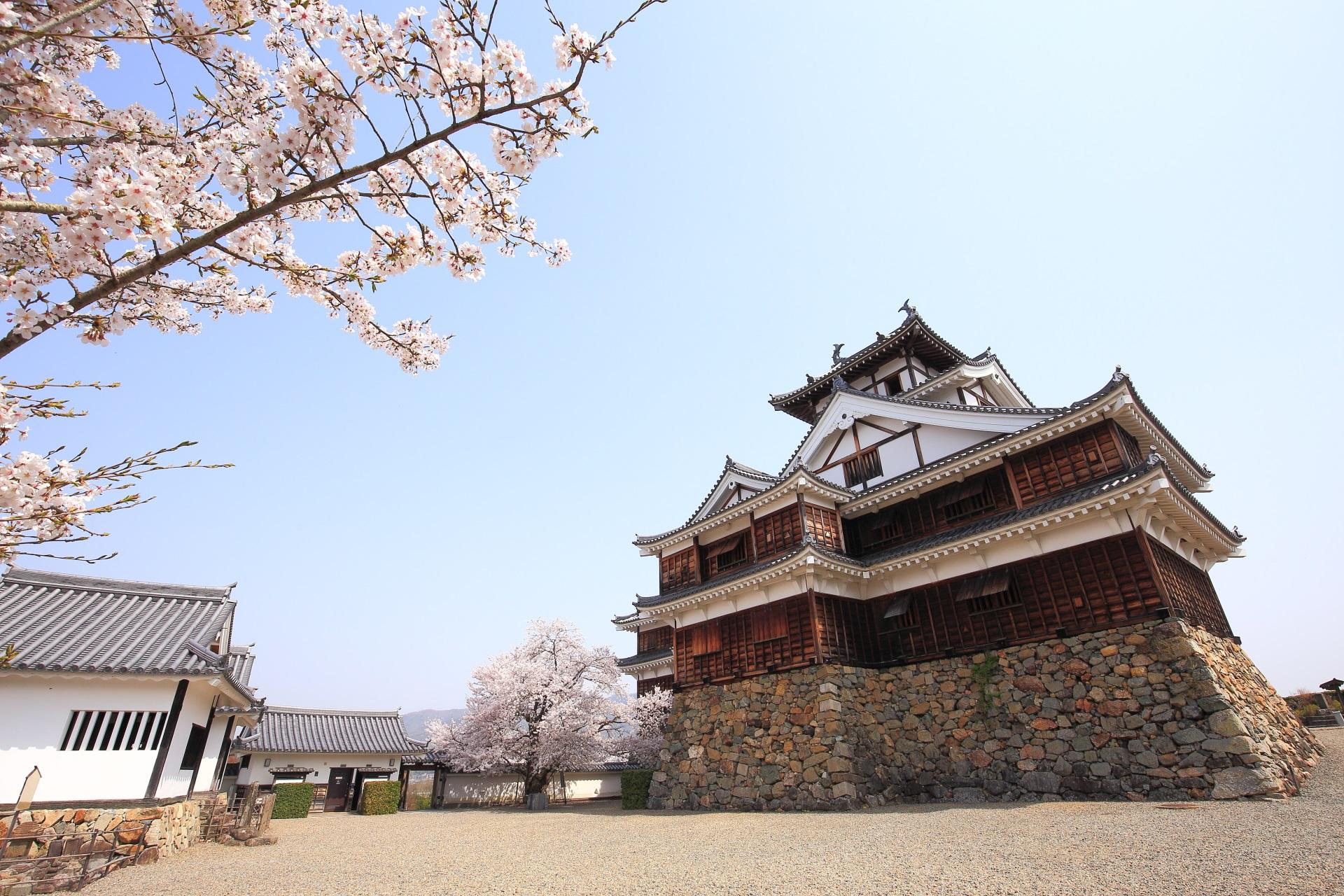 福知山城の素晴らしい城郭や春の桜
