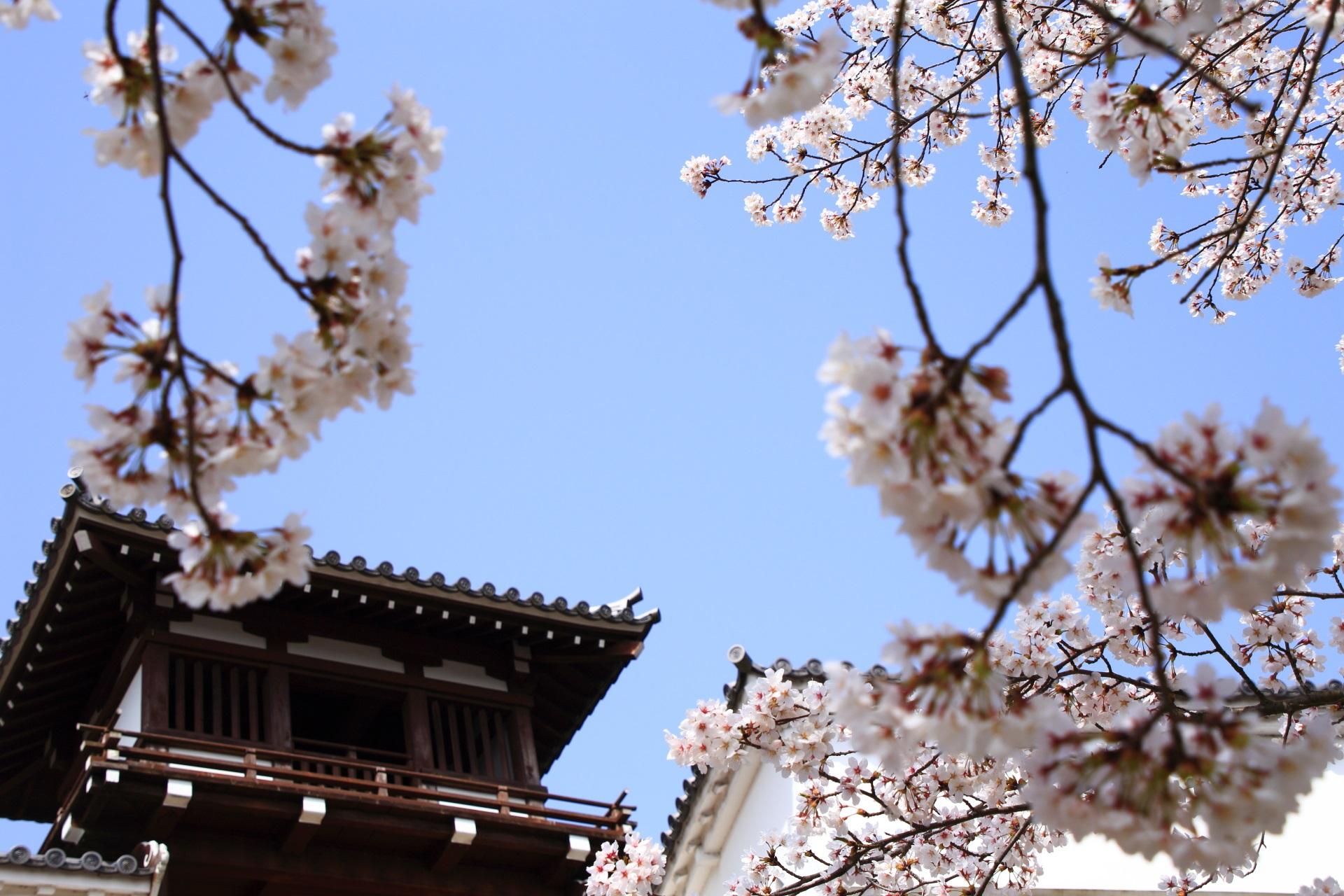 福知山城の釣鐘門と雅な桜