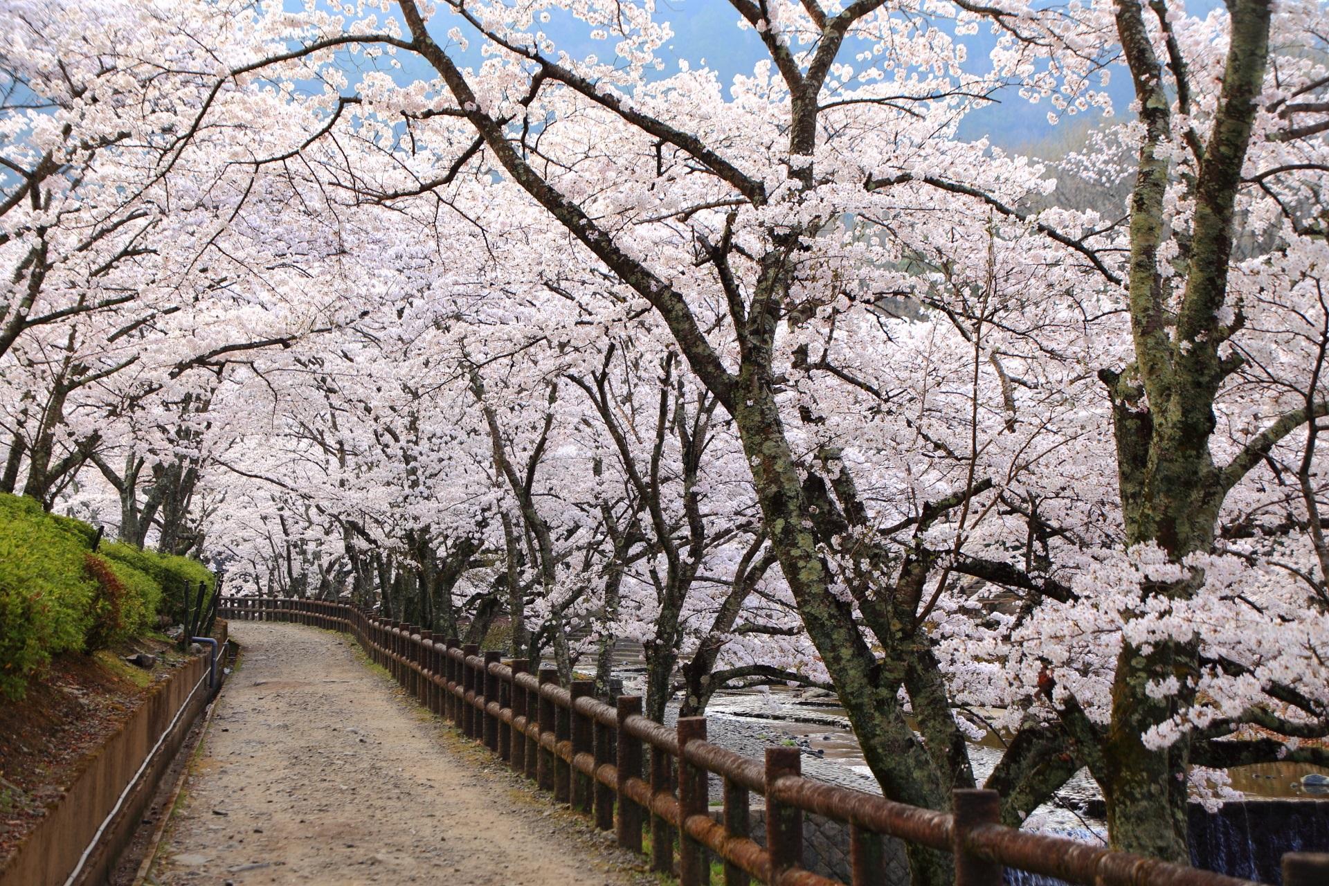 七谷川沿いの春色の空間