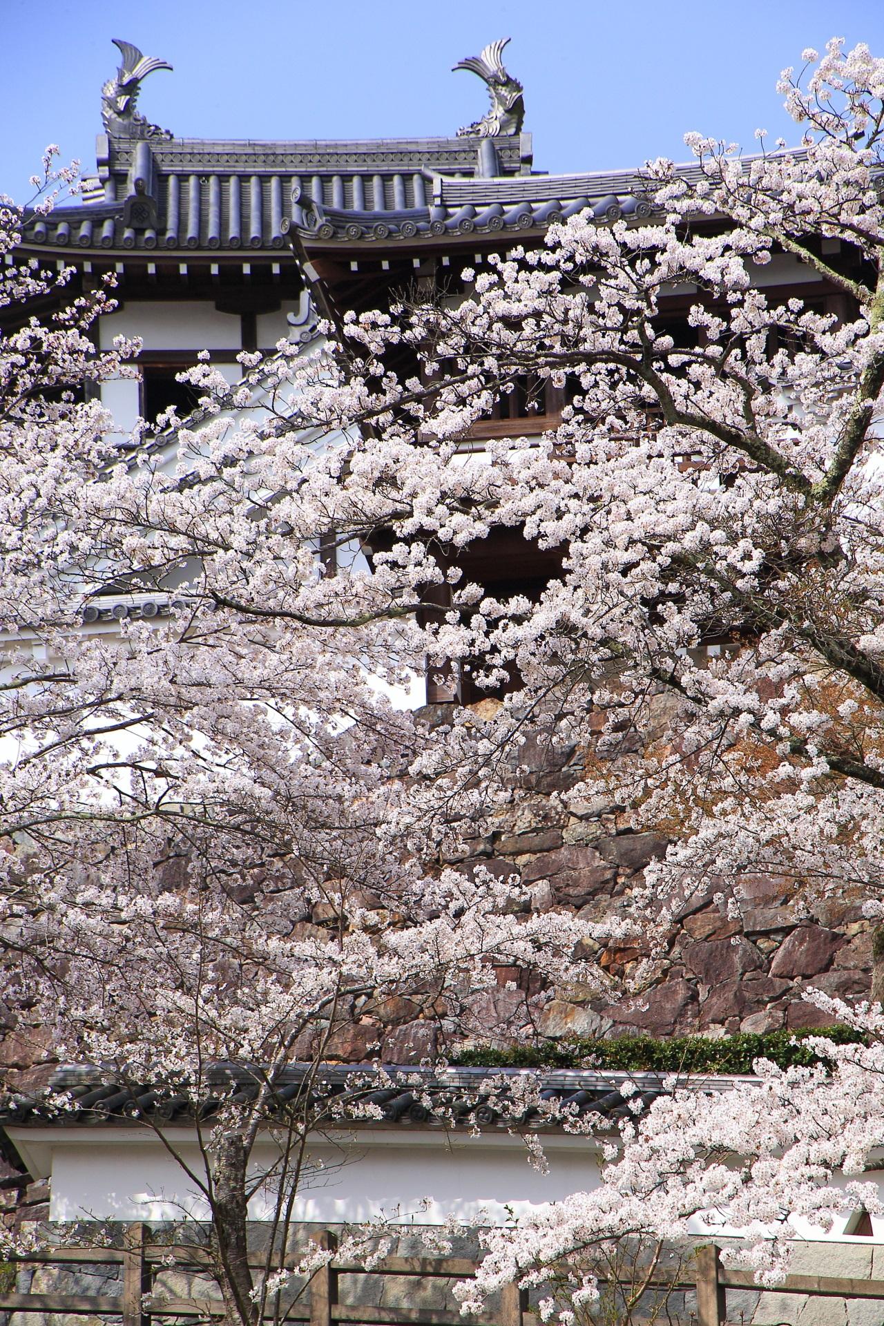 桜につつまれた福知山城の天守や釣鐘門