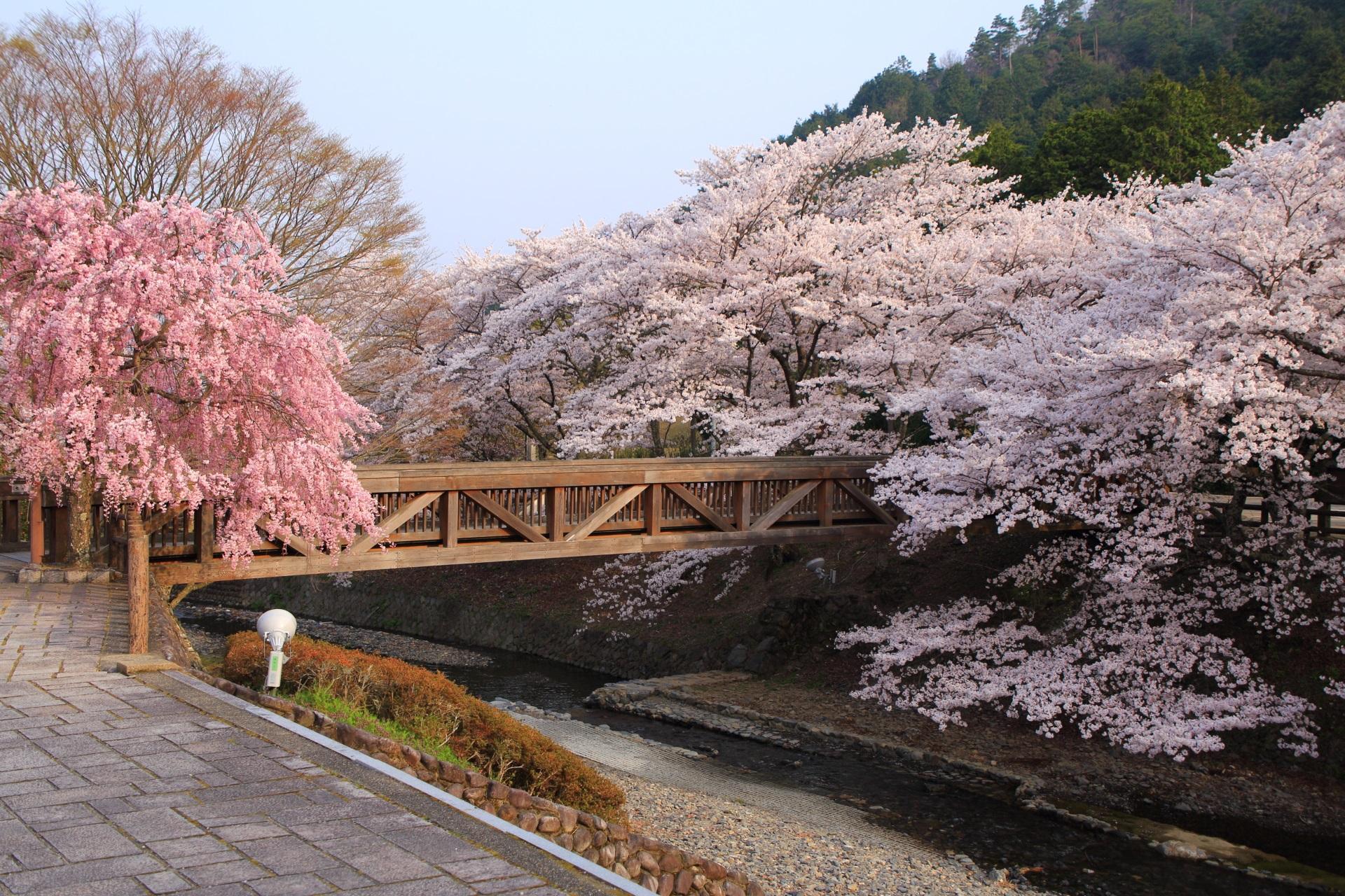 七谷川の木の橋と桜