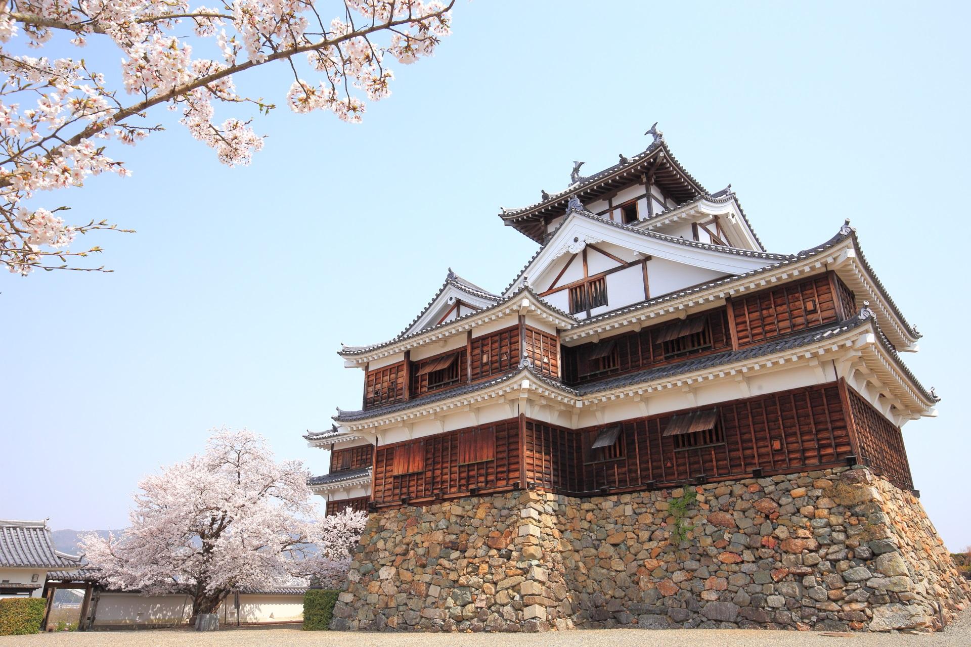 西側から眺めた福知山城と桜