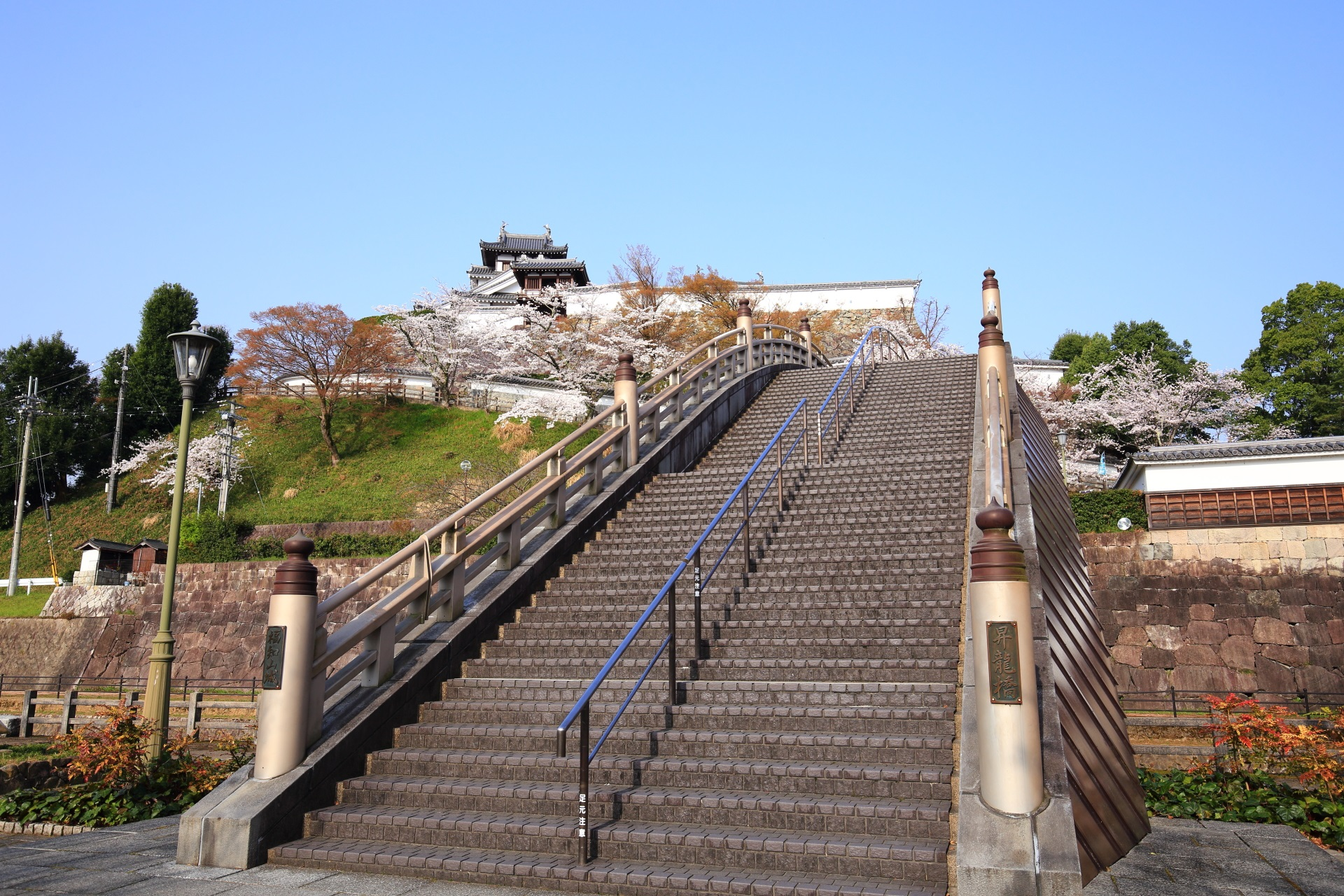 雄大な昇龍橋と福知山城の桜