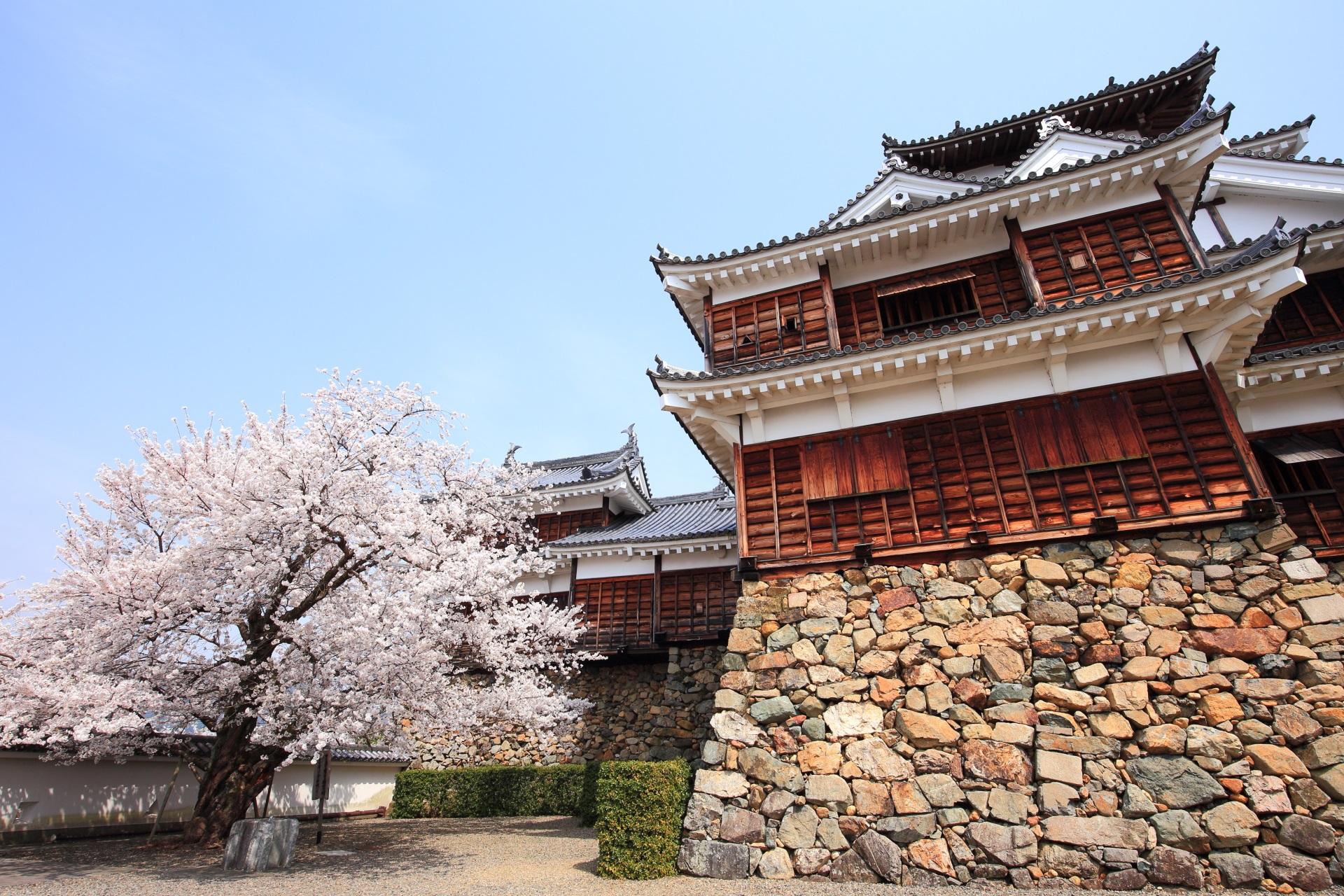古風な福知山城の咲き誇る雅な桜