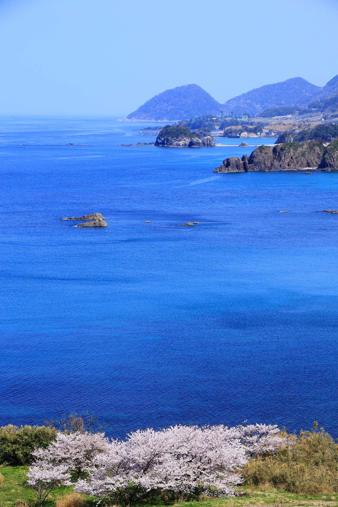 丹後松島の見事な青い海と桜の絶景