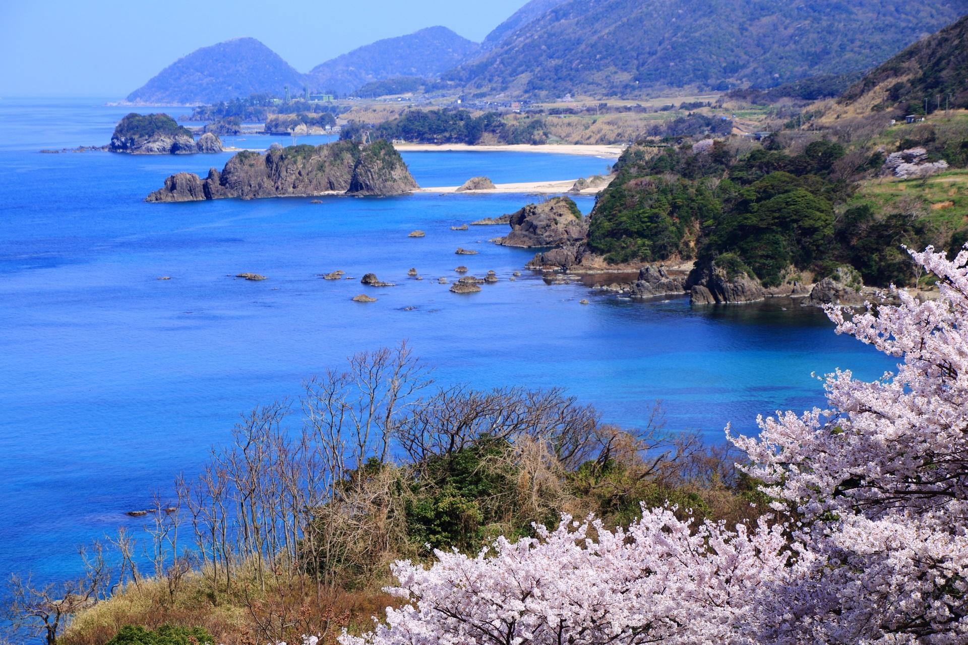 圧巻の青い海と丹後松島を染める桜