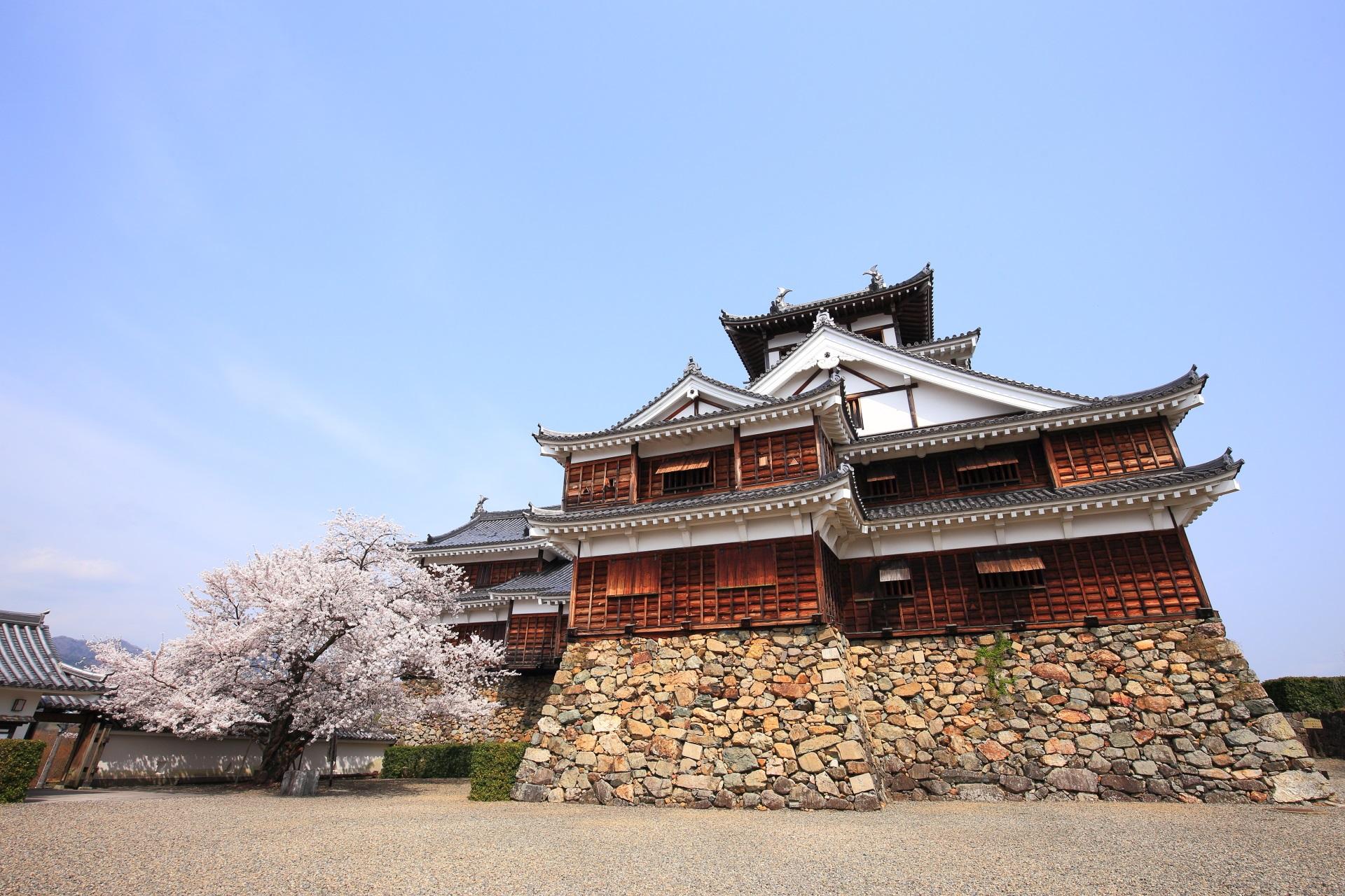 福知山城と満開の桜