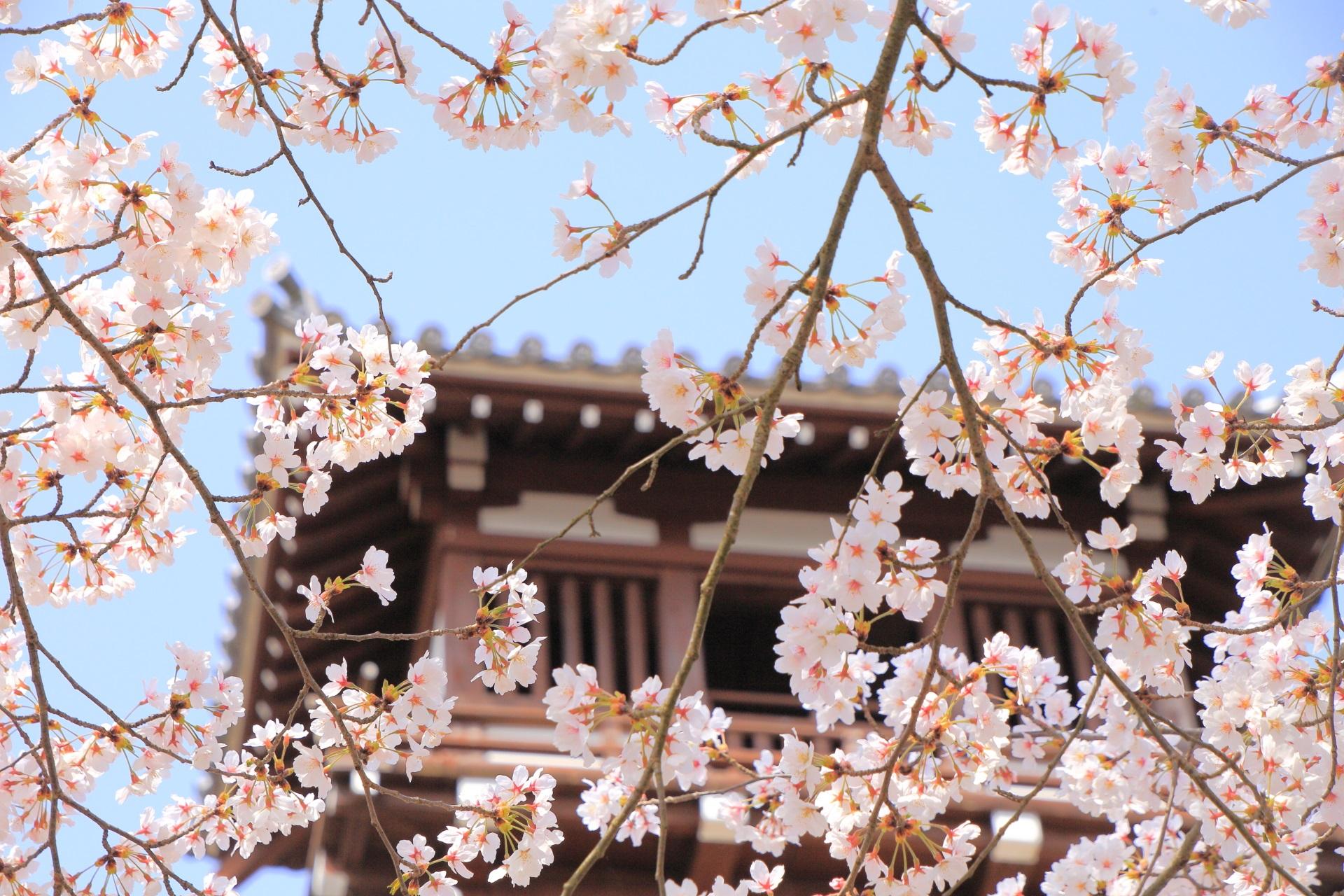 福知山城の可憐な桜に染まる釣鐘門