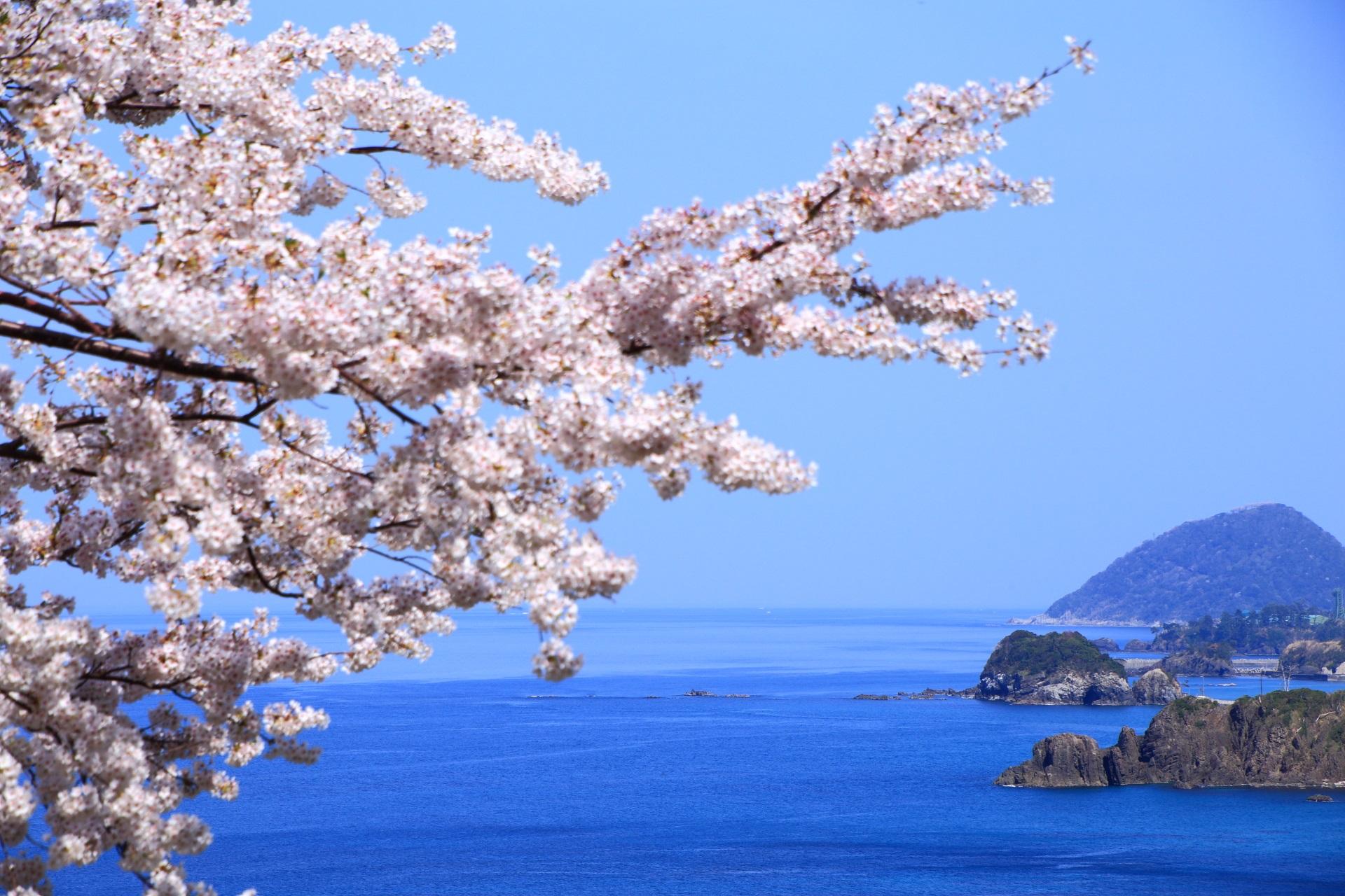 桜の向こうに浮かぶ岩