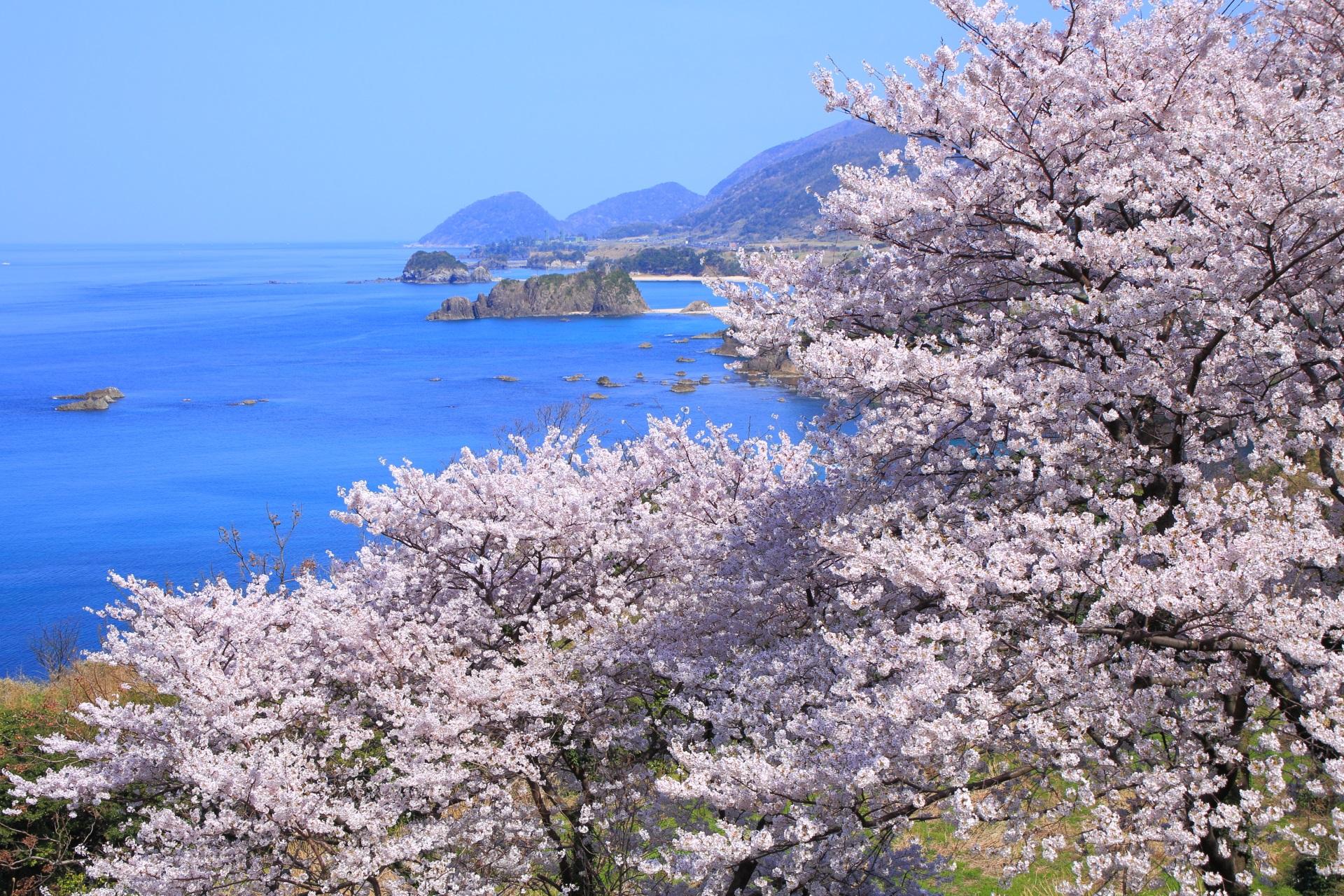 桜につつまれる春の丹後松島