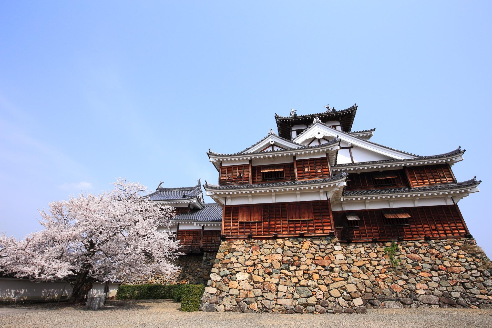 福知山城と桜の極上の春の風景