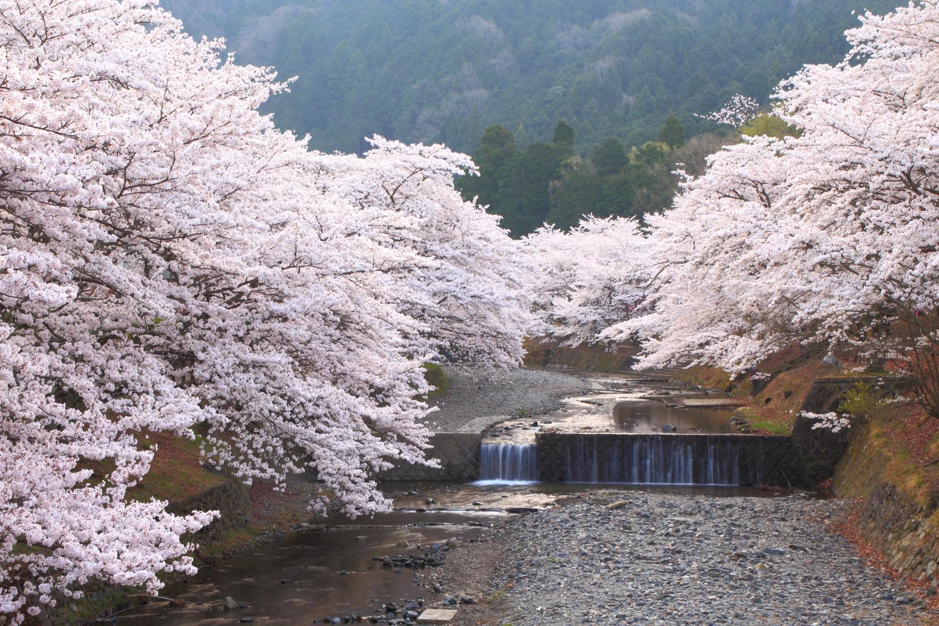 亀岡の森の中の絵になる春の風景