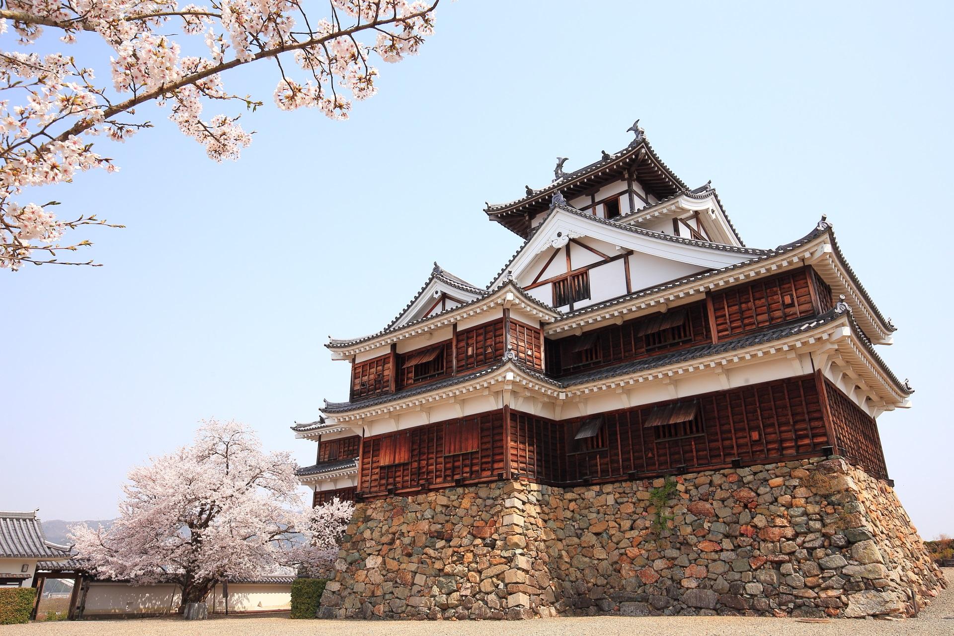 福知山城の天守閣と桜
