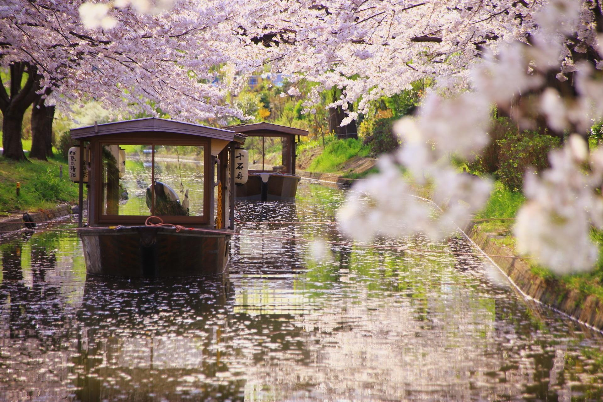 2019年の京都の桜