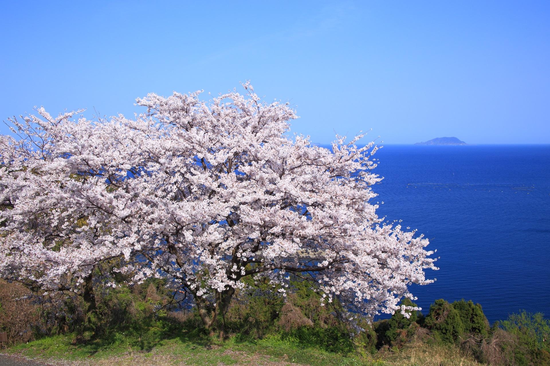新井崎 桜