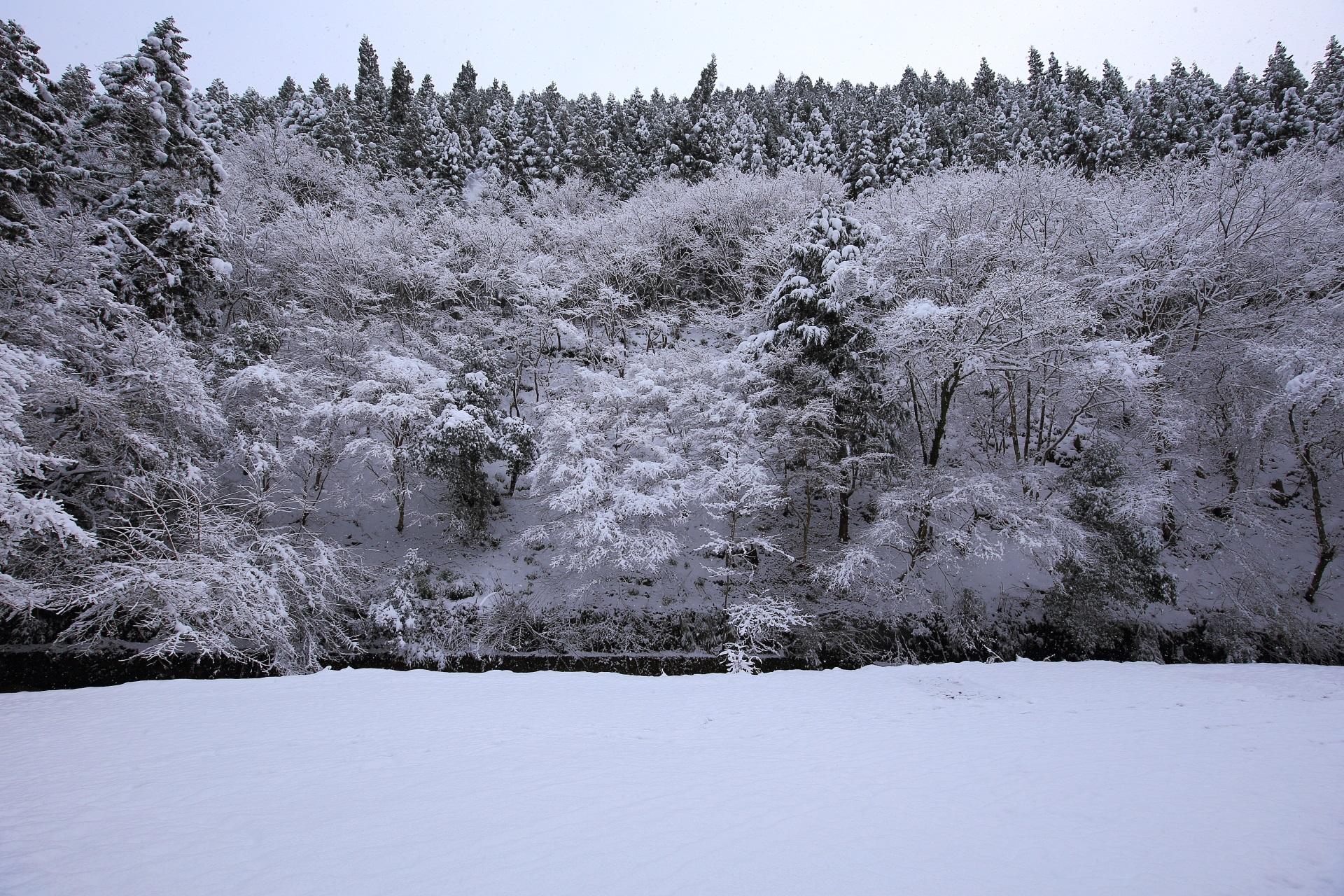 冬の貴船川と極上の雪景色