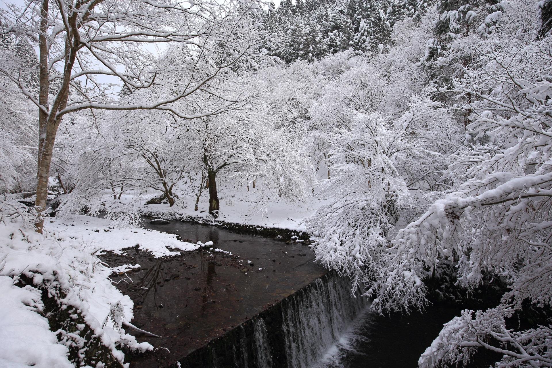 流れ落ちる滝を彩る雪の花