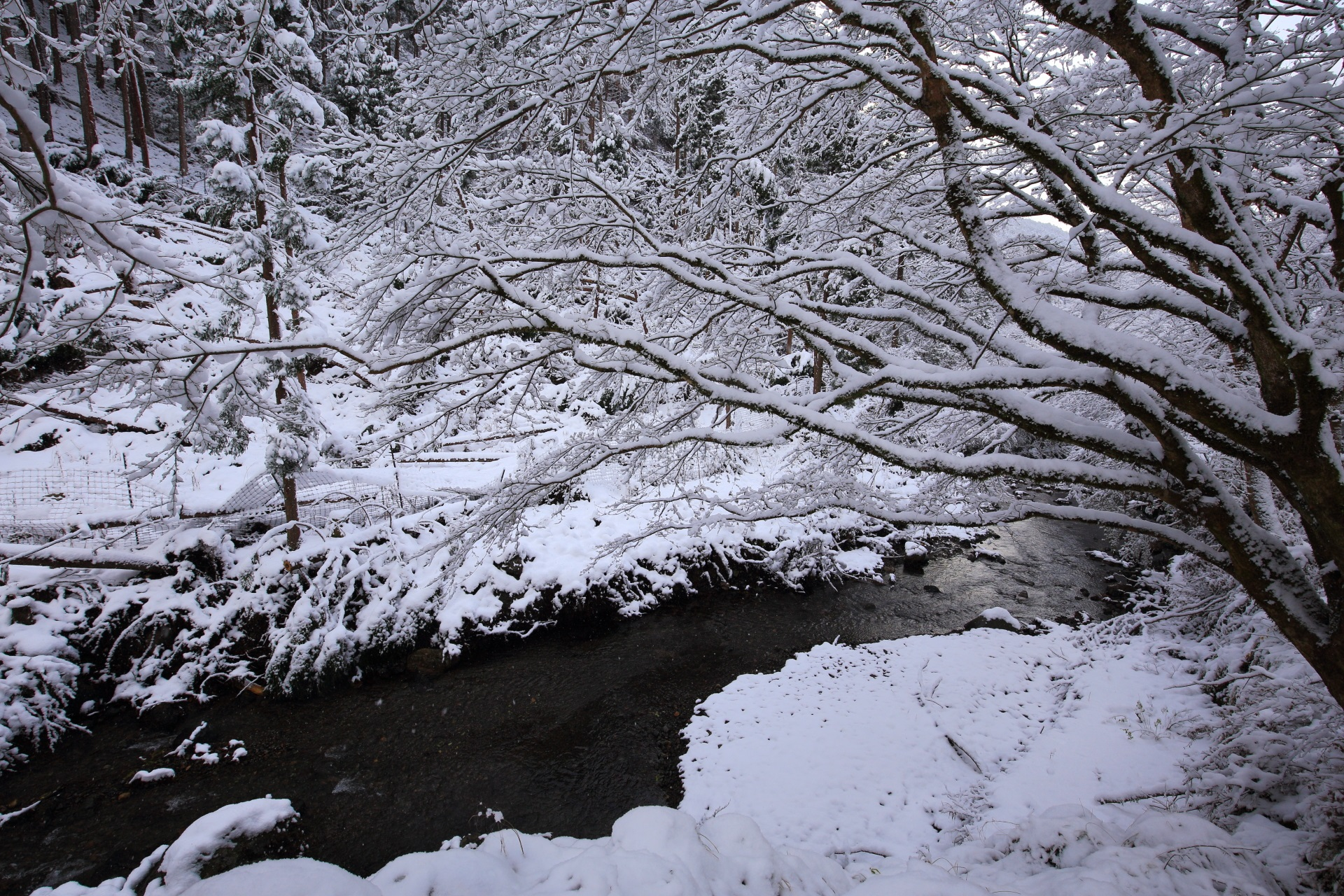 静寂の中で聞こえる雪の貴船川のせせらぎ
