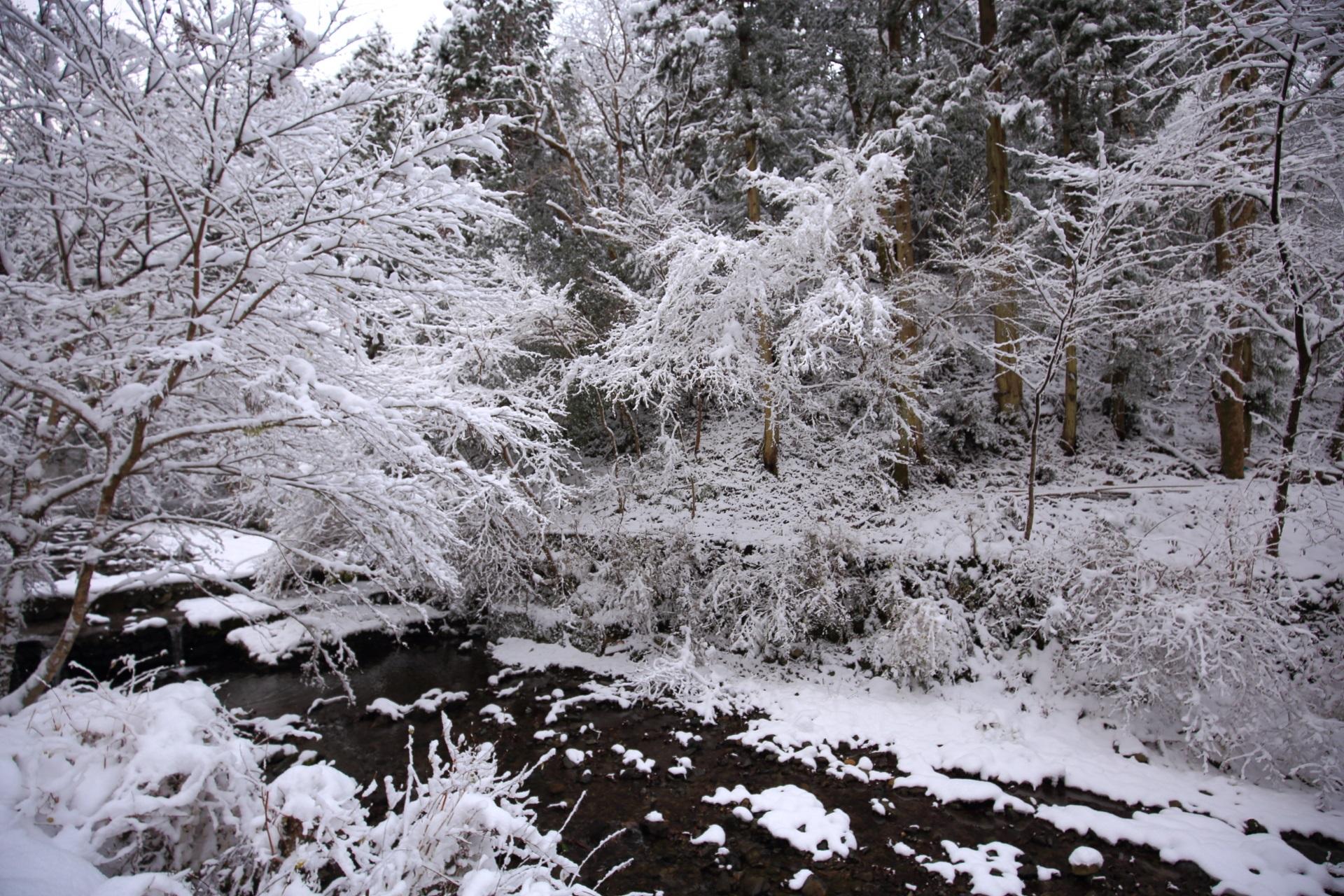 自然の中を流れる雪の貴船川