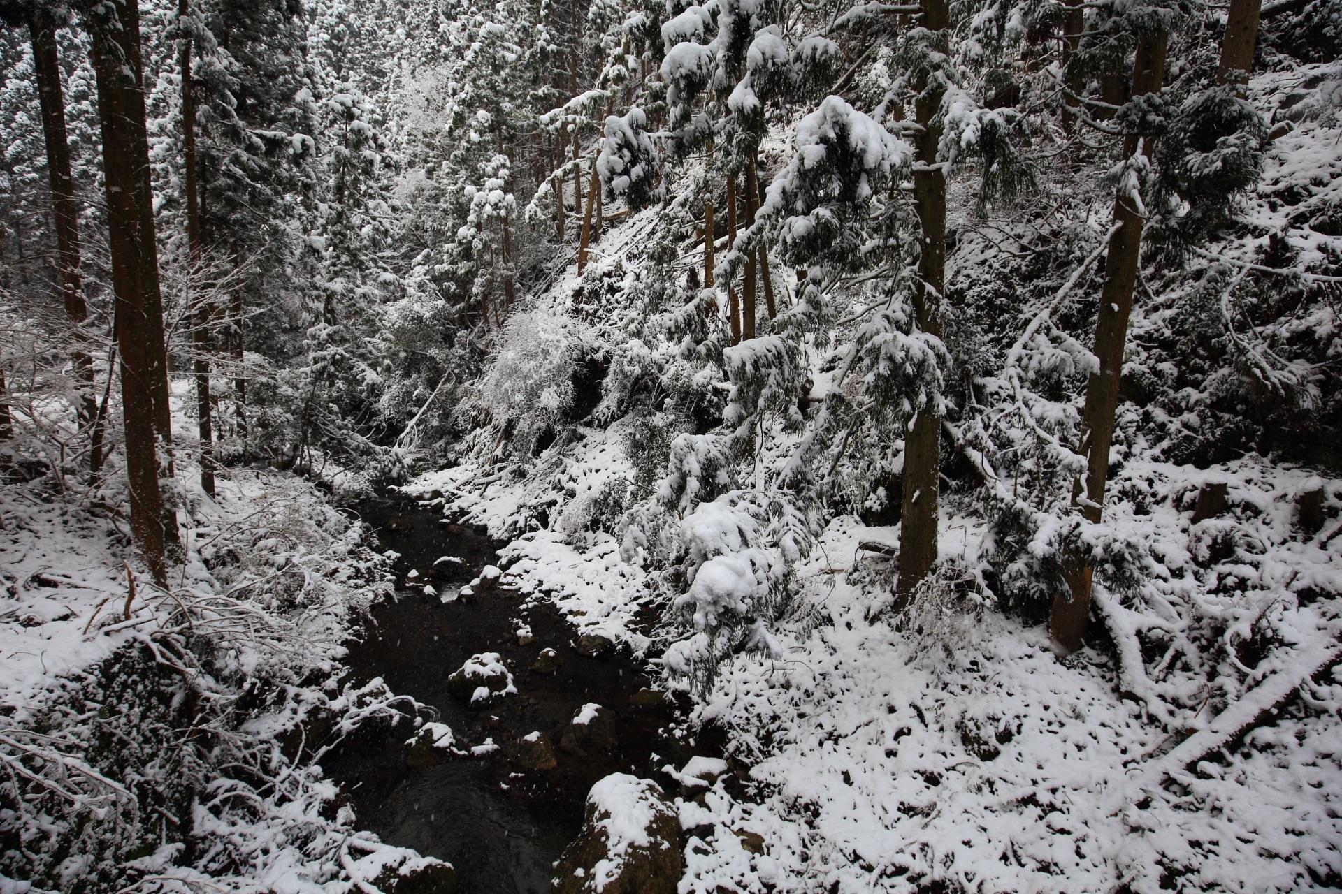 貴船川と真っ白に染まる木々
