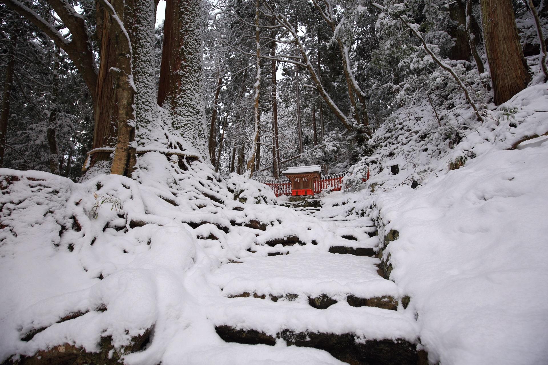 貴船神社の「相生の杉」の雪景色