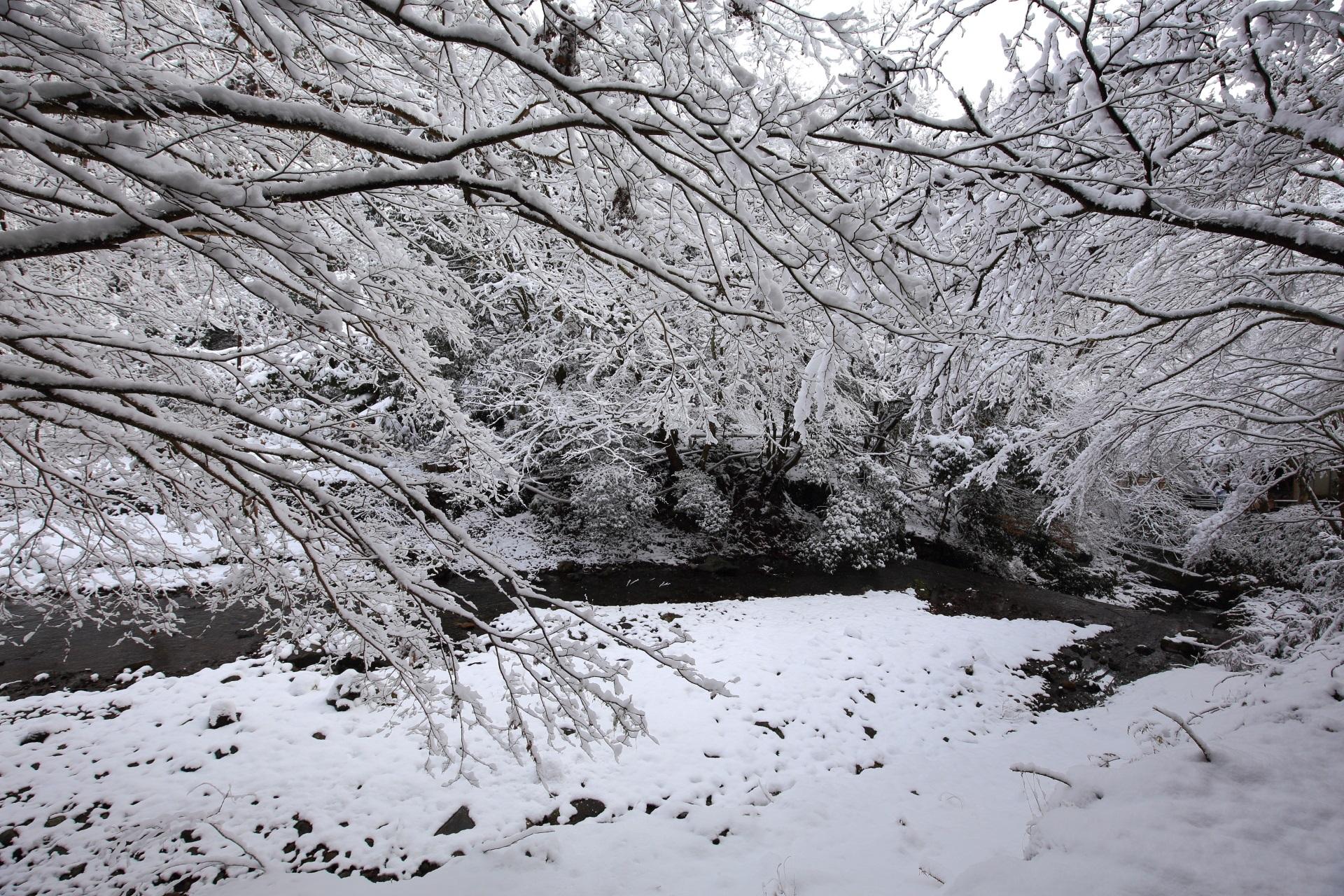 貴船川に降り注ぐ雪の花