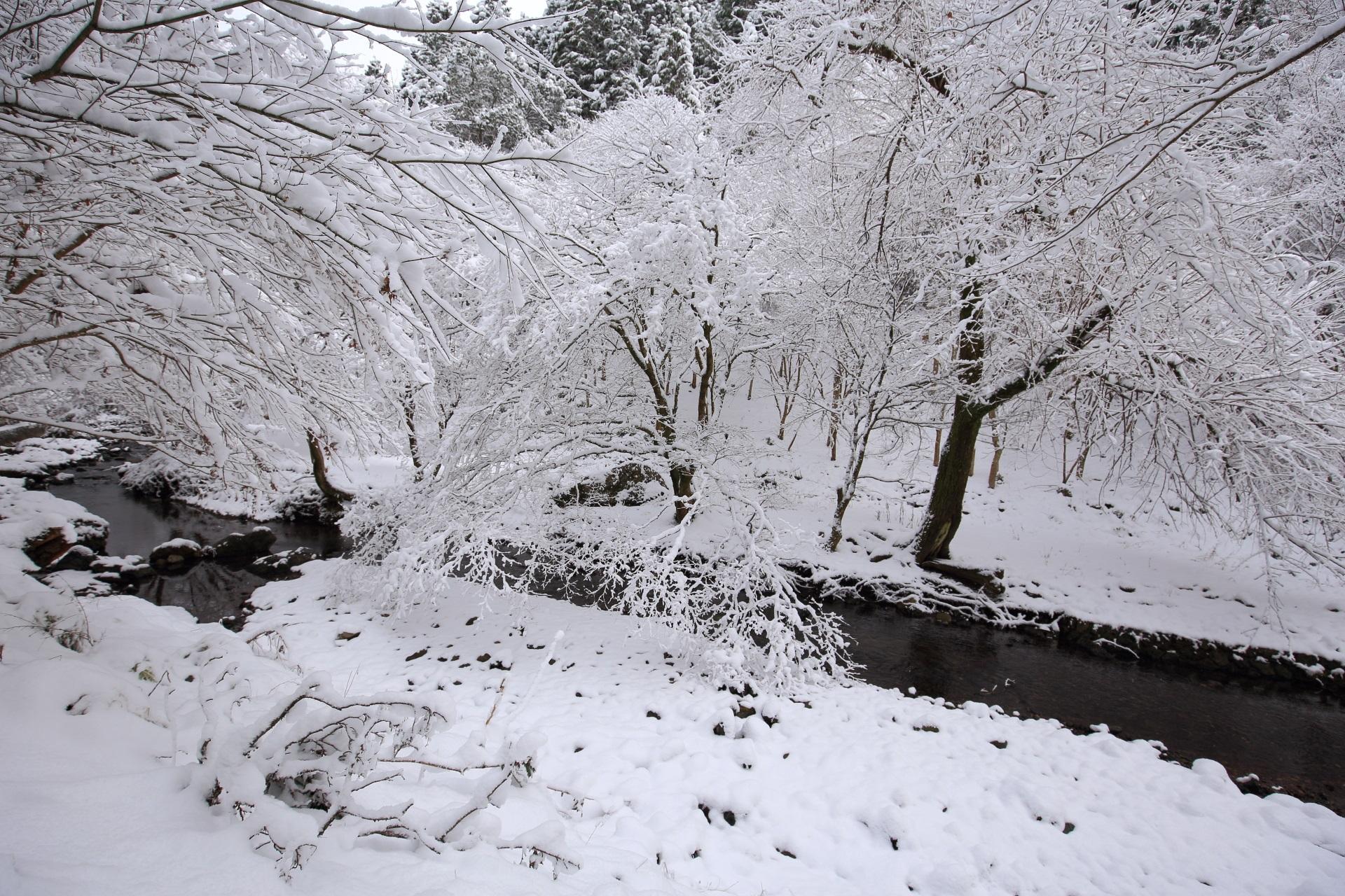 どこまでも続く貴船川の見事な雪景色