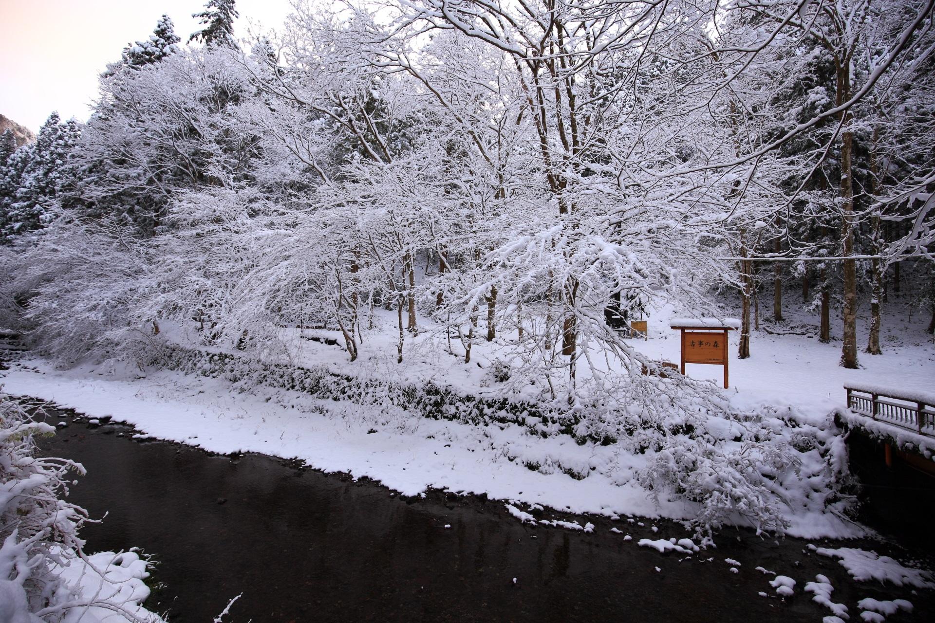 貴船川を染める見事な雪の華