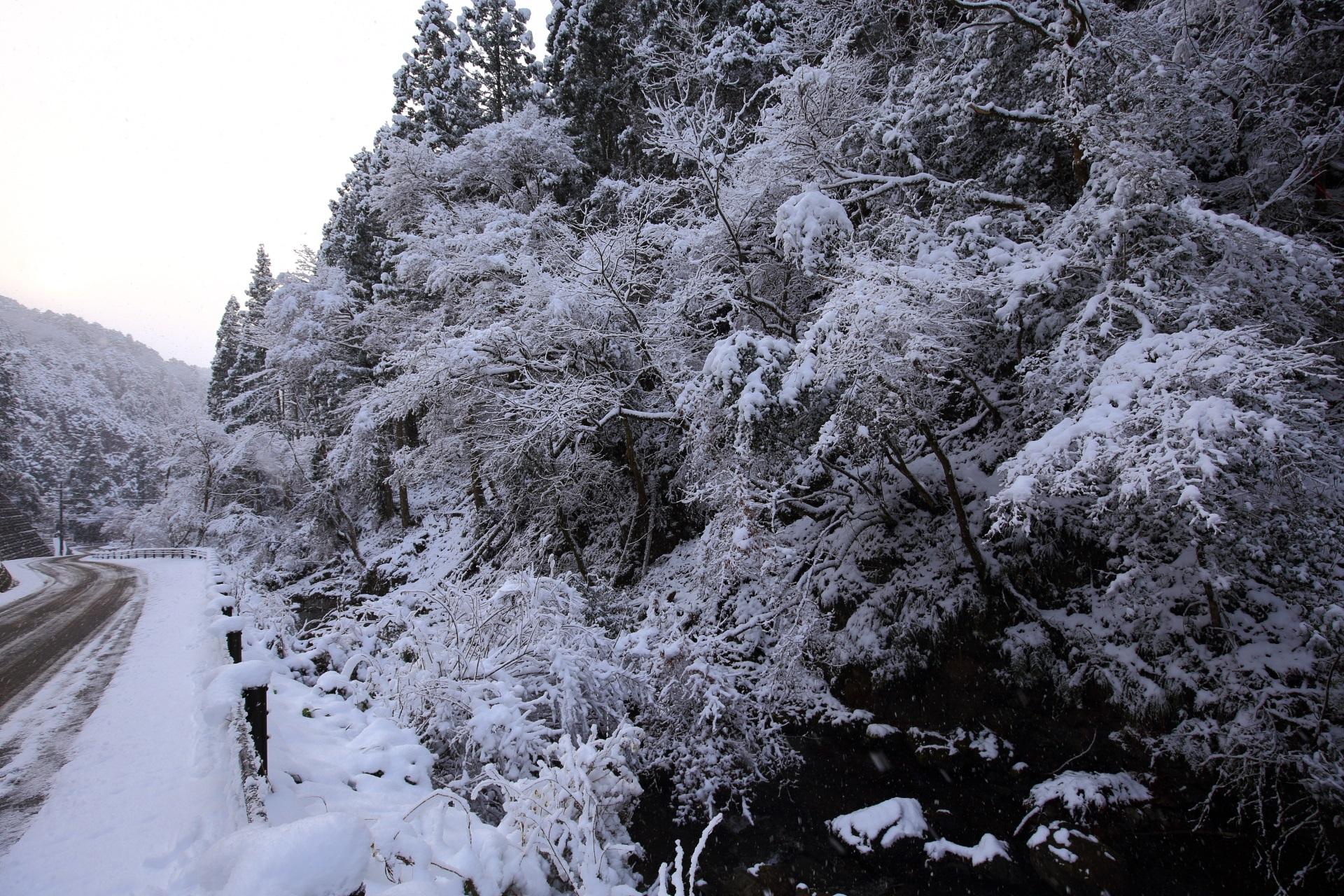 溢れ出す真っ白な雪の花