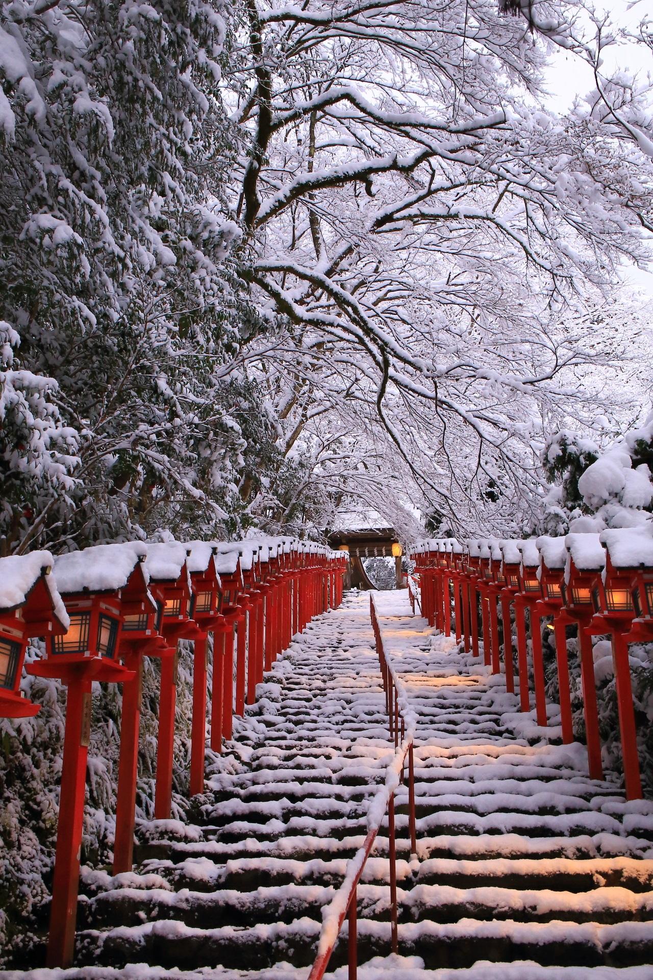 貴船神社の石段の上で優雅に咲く雪の花