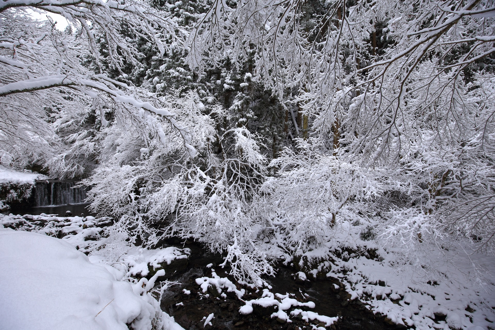 滝とともに降り注ぐ雪の華