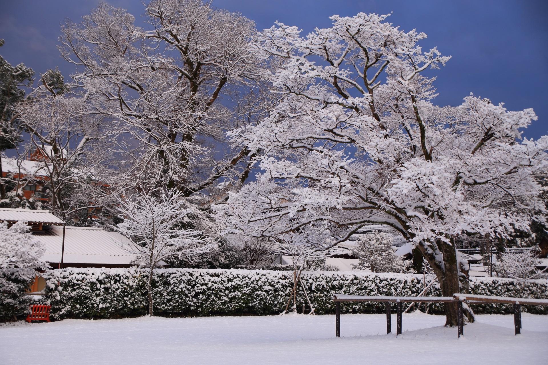 上賀茂神社の多様な雪の花